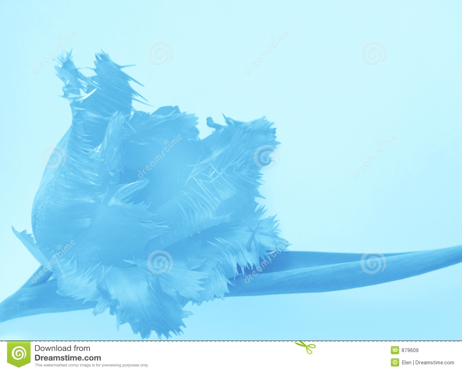 Błękitny kwiatek tło
