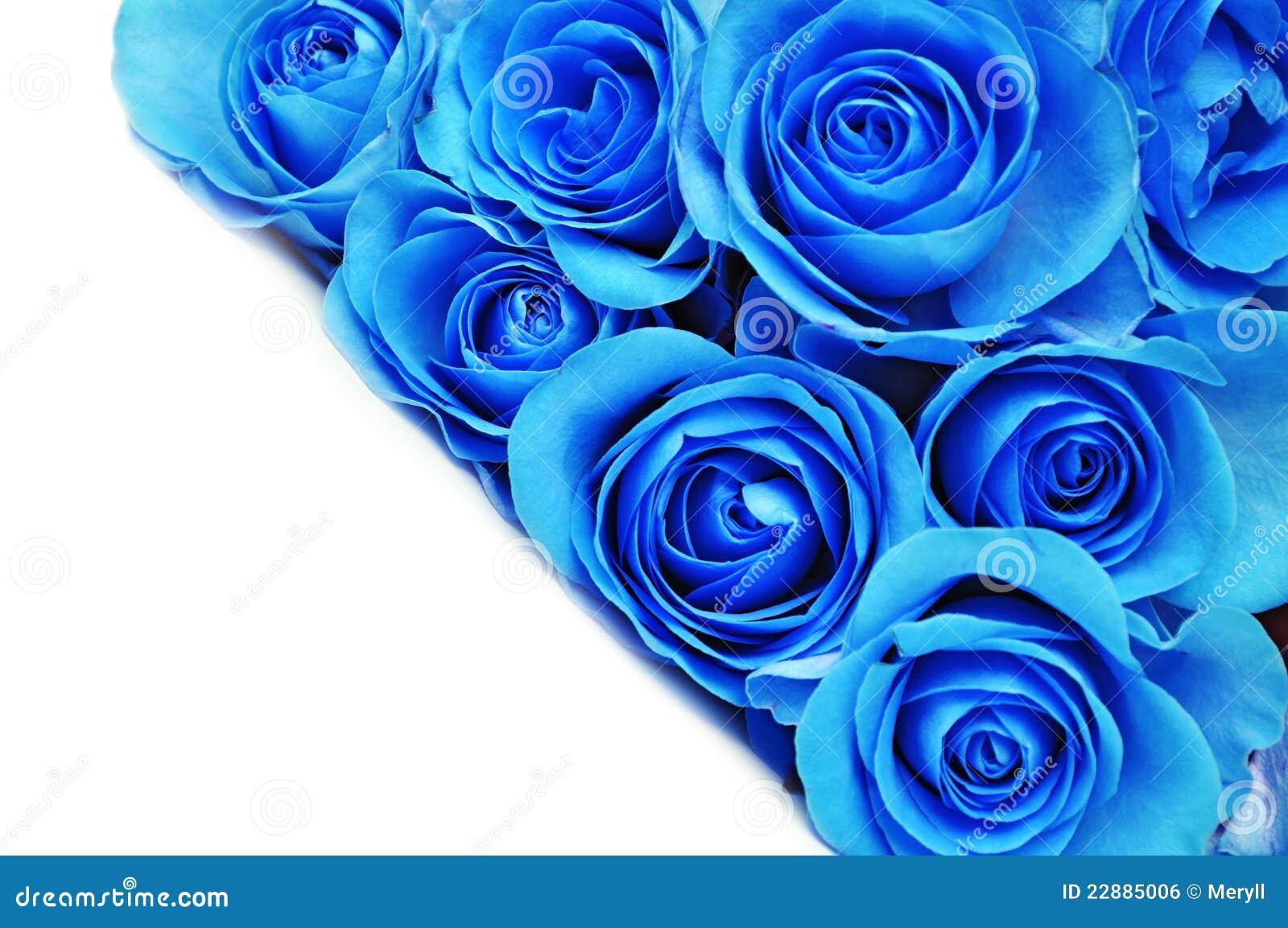 Błękitny kwiaty wzrastali
