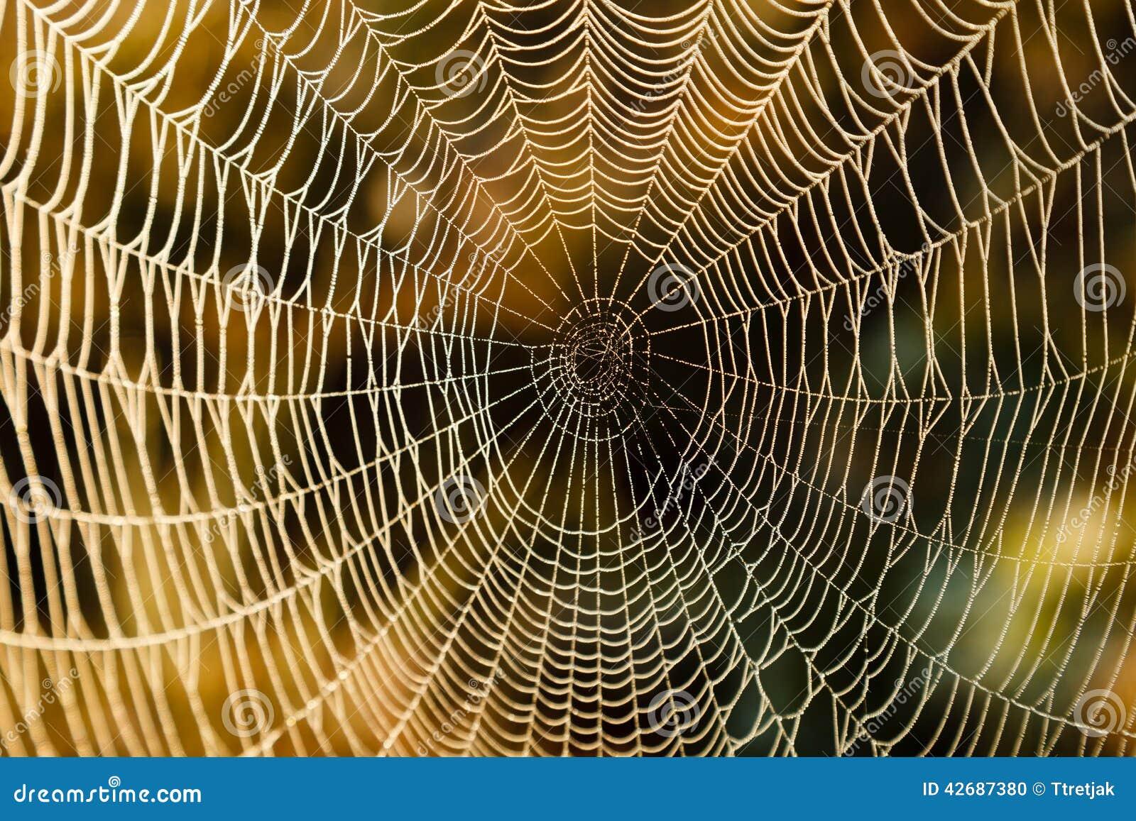 Błękitny miękka pająka odcienia sieć