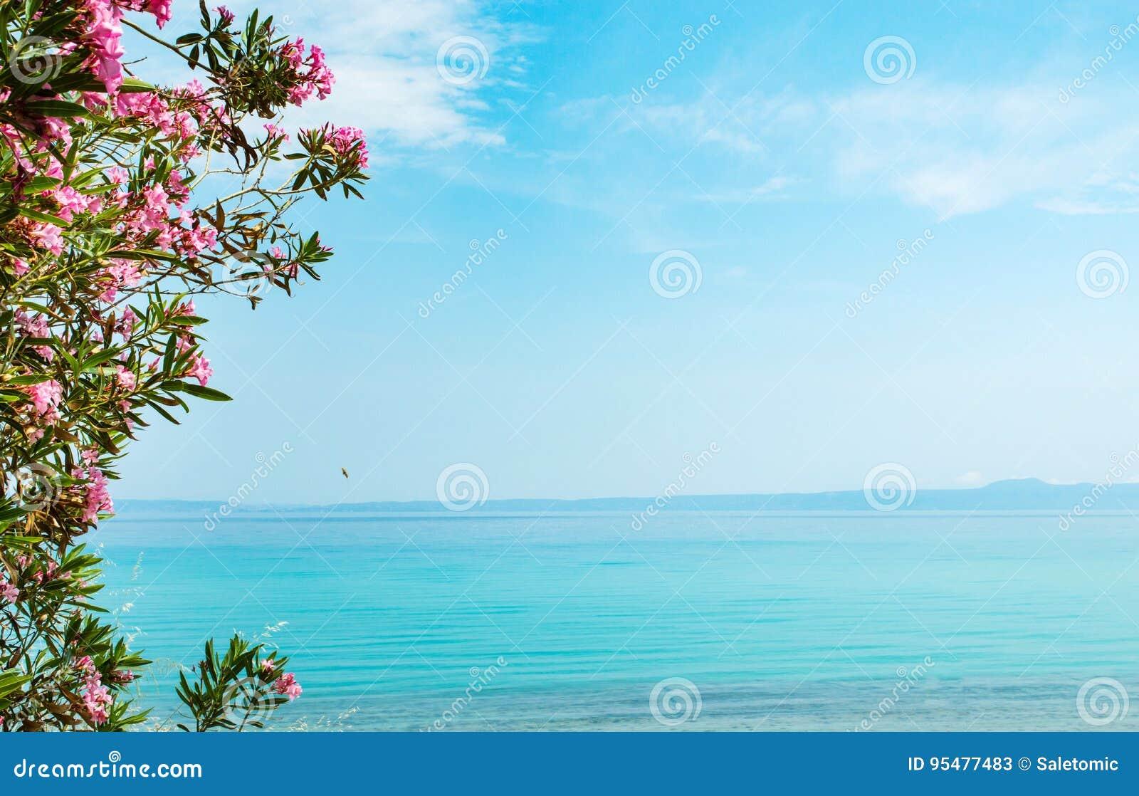Błękitny morze otaczający kwiatami