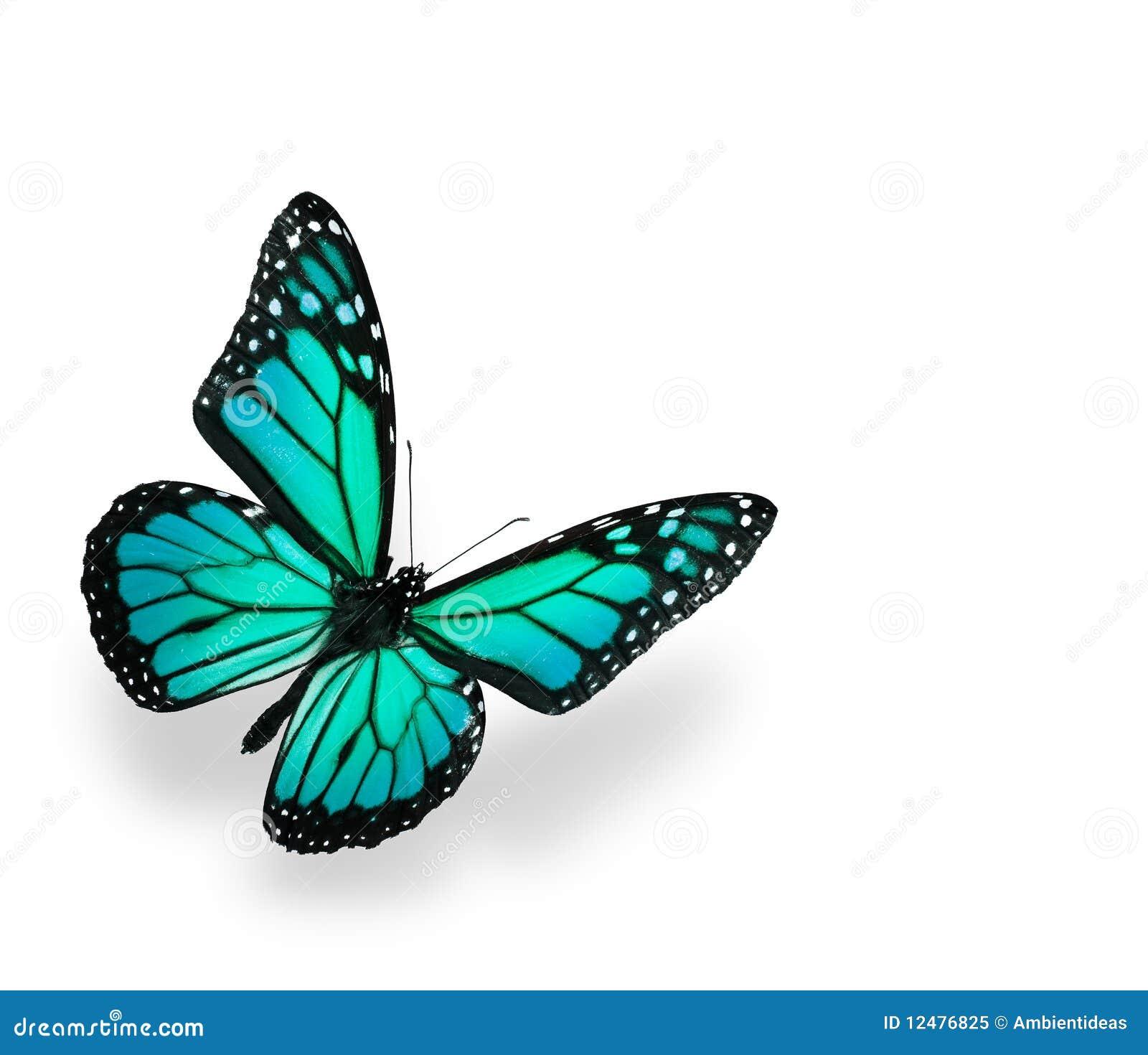 Błękitny motyla zieleni odosobniony biel