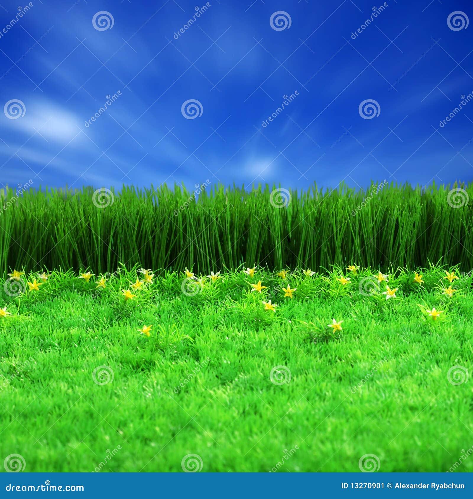 Błękitny zieleni gress niebo