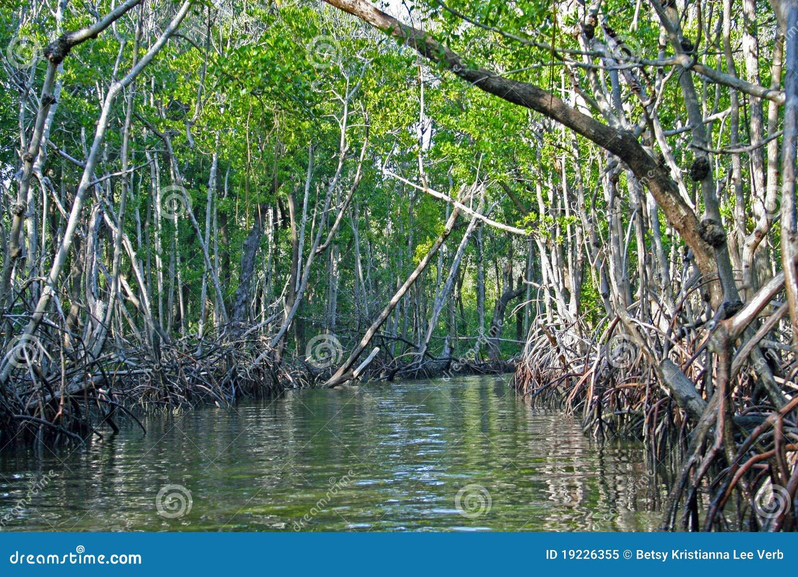 Błota mangrowe