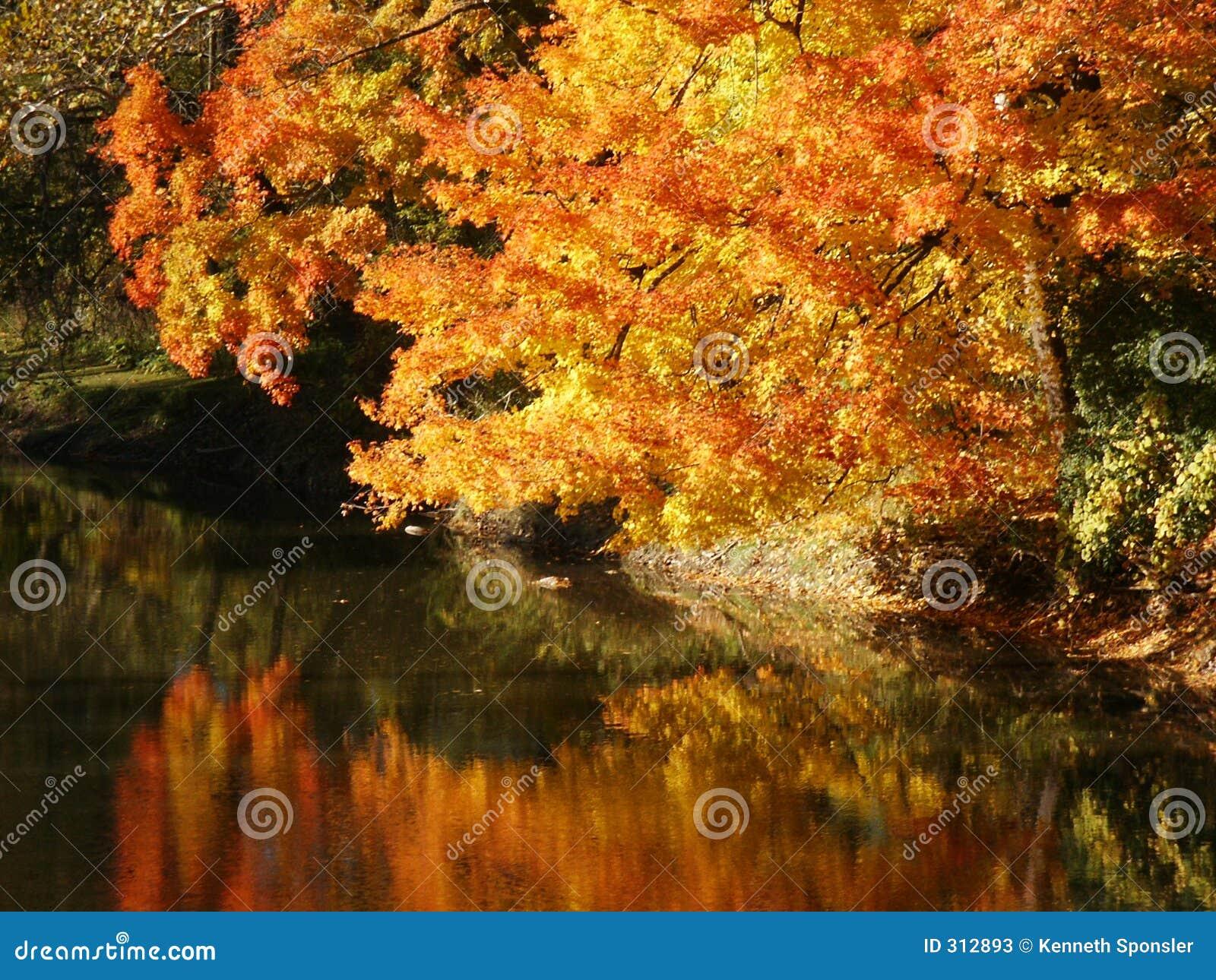 Błyskotliwość jesienią