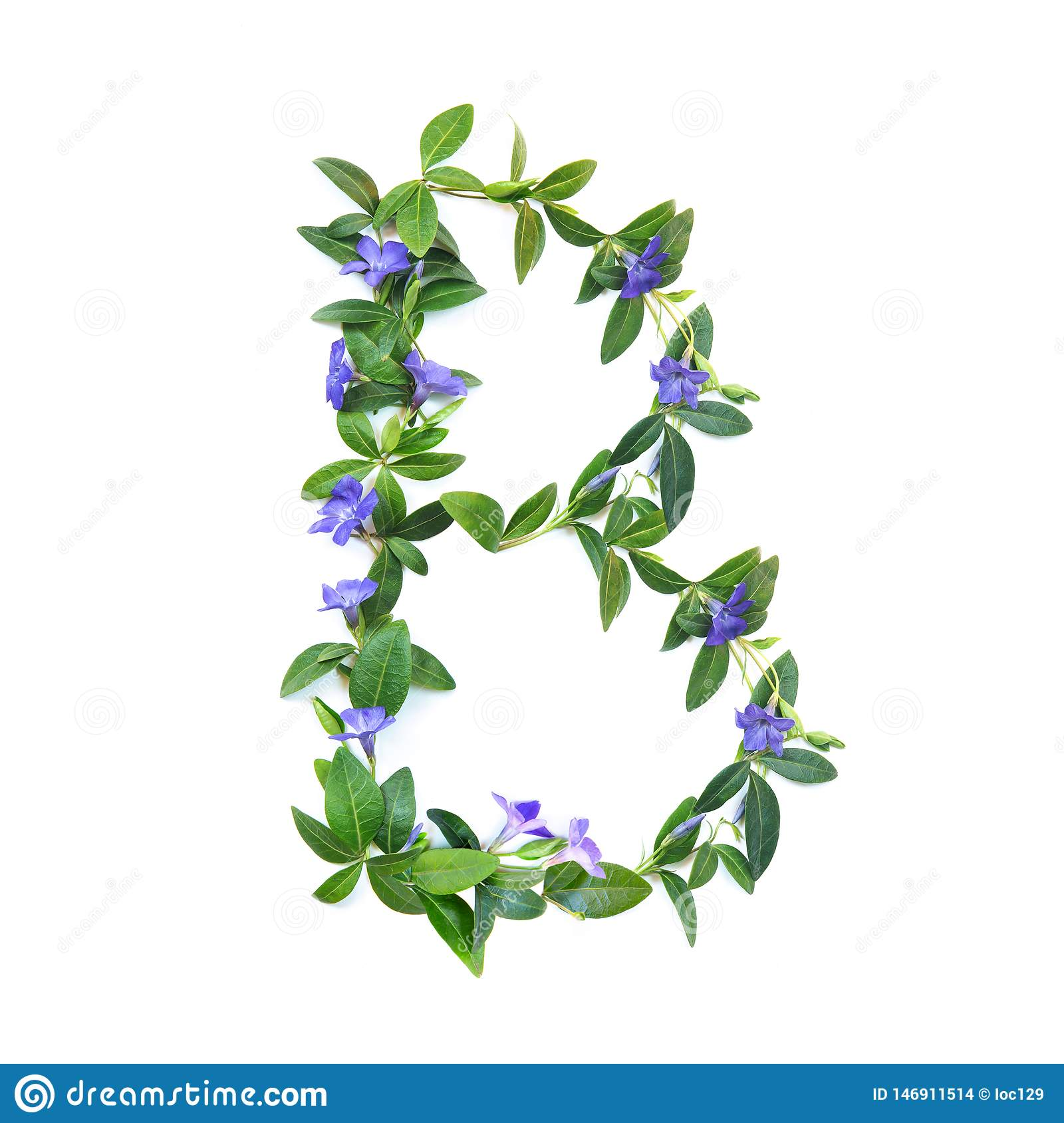 B, letter of the alphabet of flowers isolated on white background. The letter of flowers and leaves of periwinkle. Green and