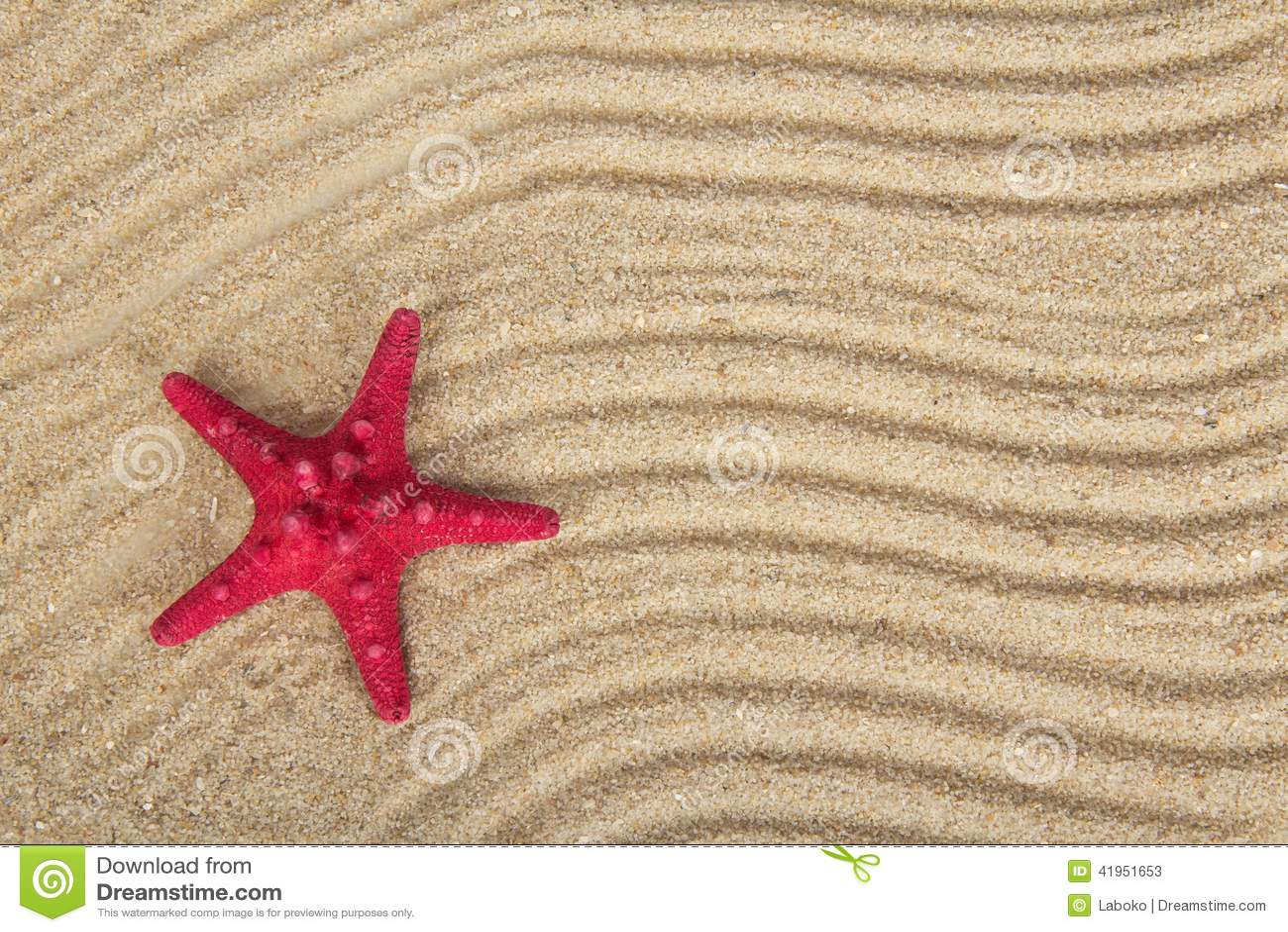 Błogie rozgwiazdy na piasku