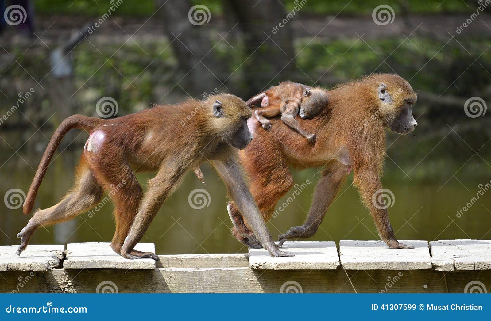 Babianer och barn