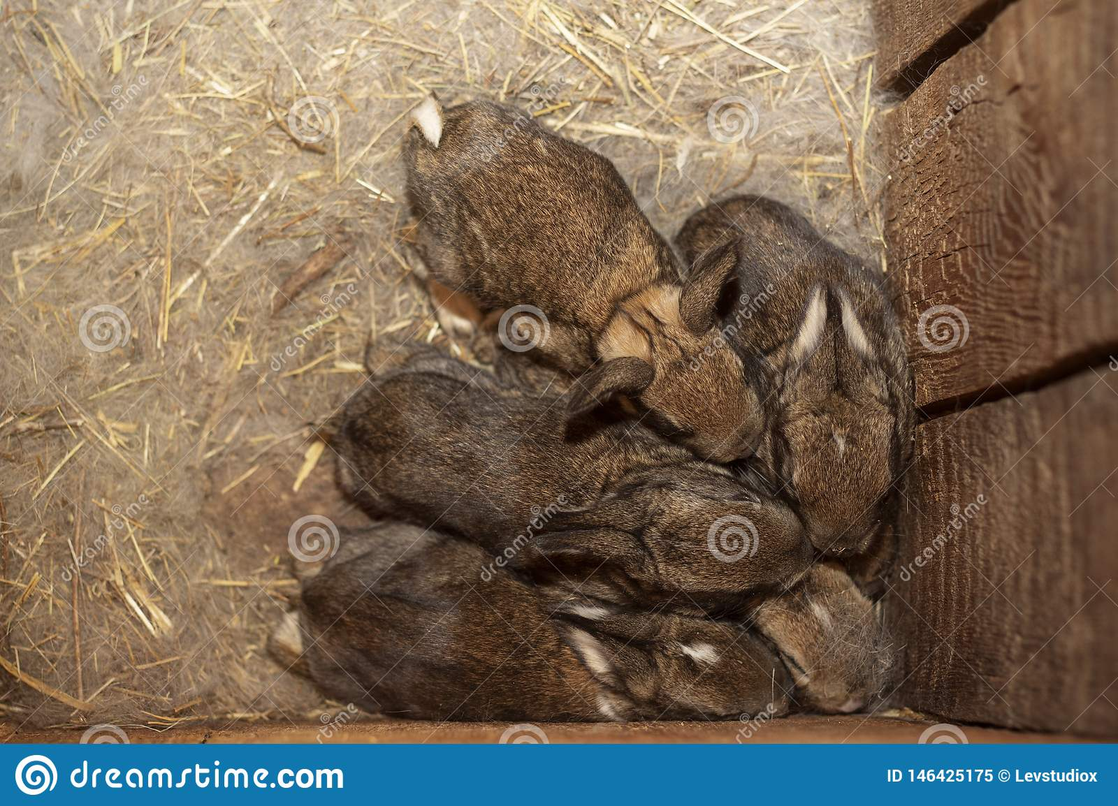Babies rabbits in a warm nest of wool pressed against each other