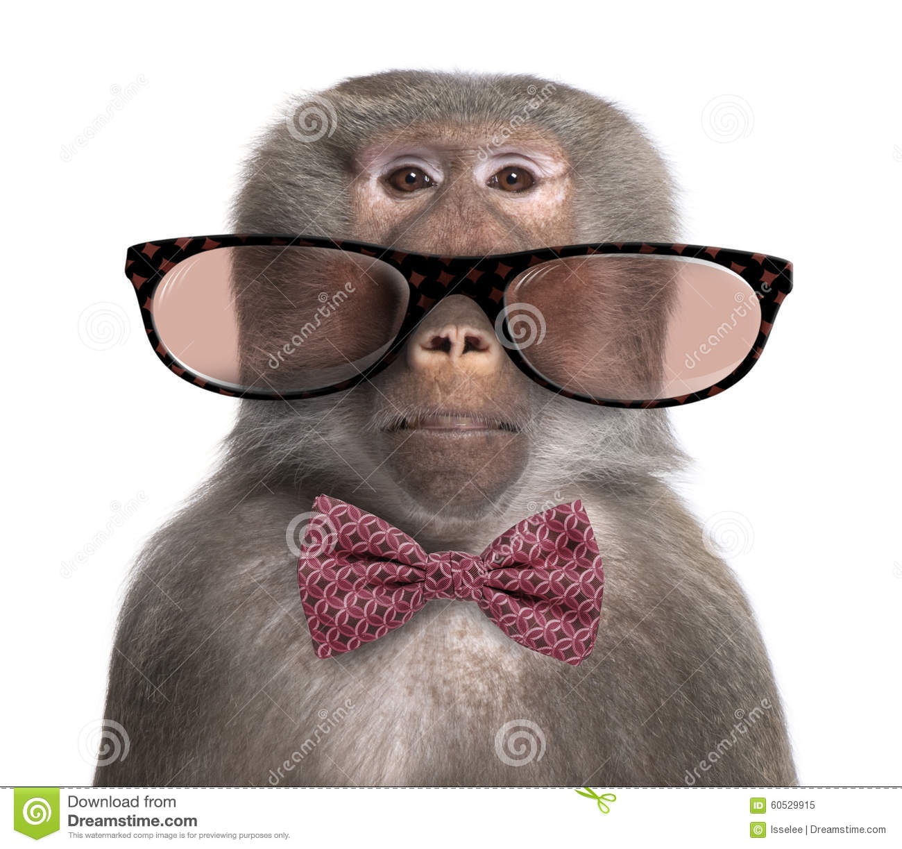 Baboon wearing glasses and a bow tie in front of a white background.