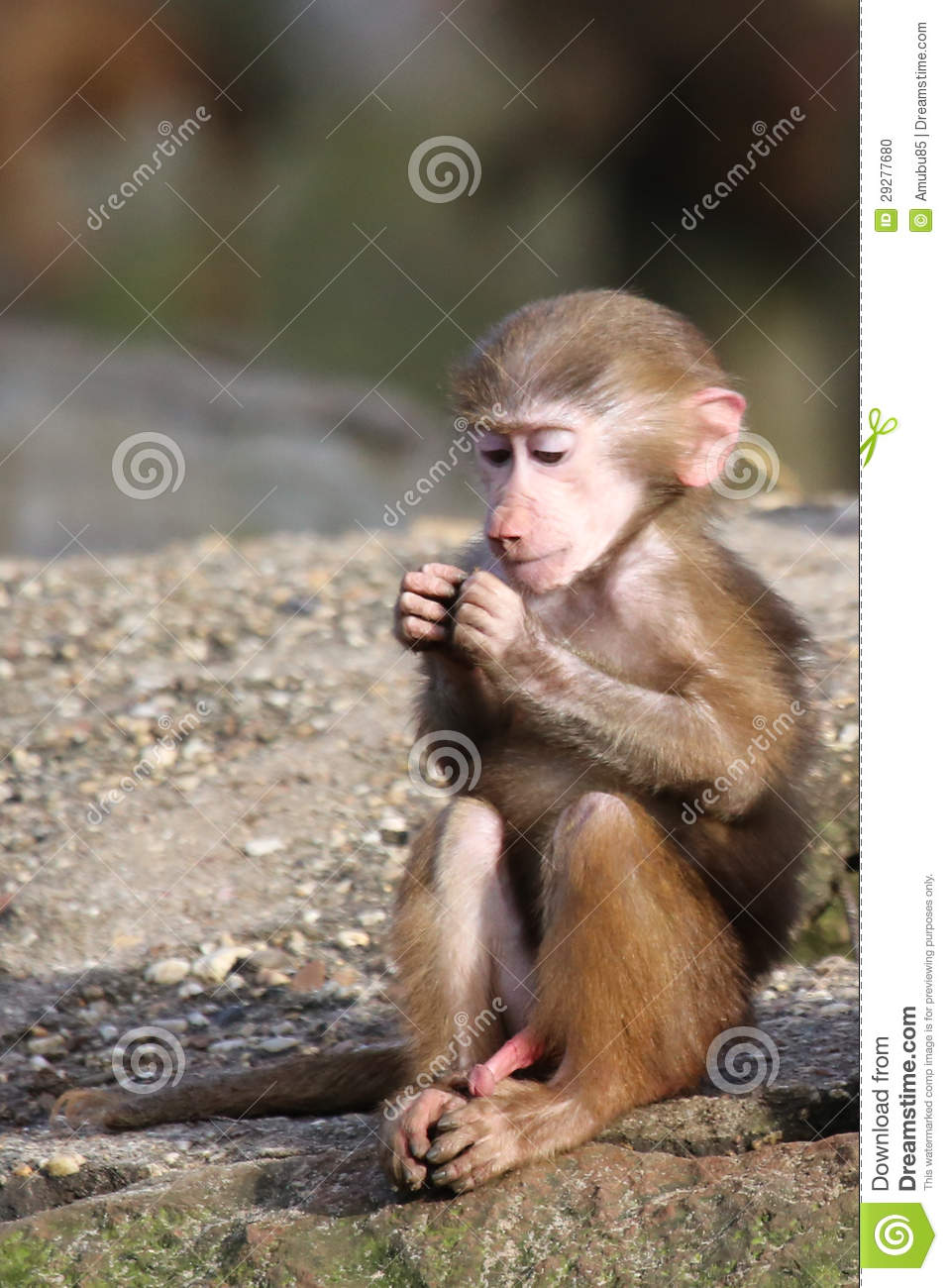 dream baboons meaning