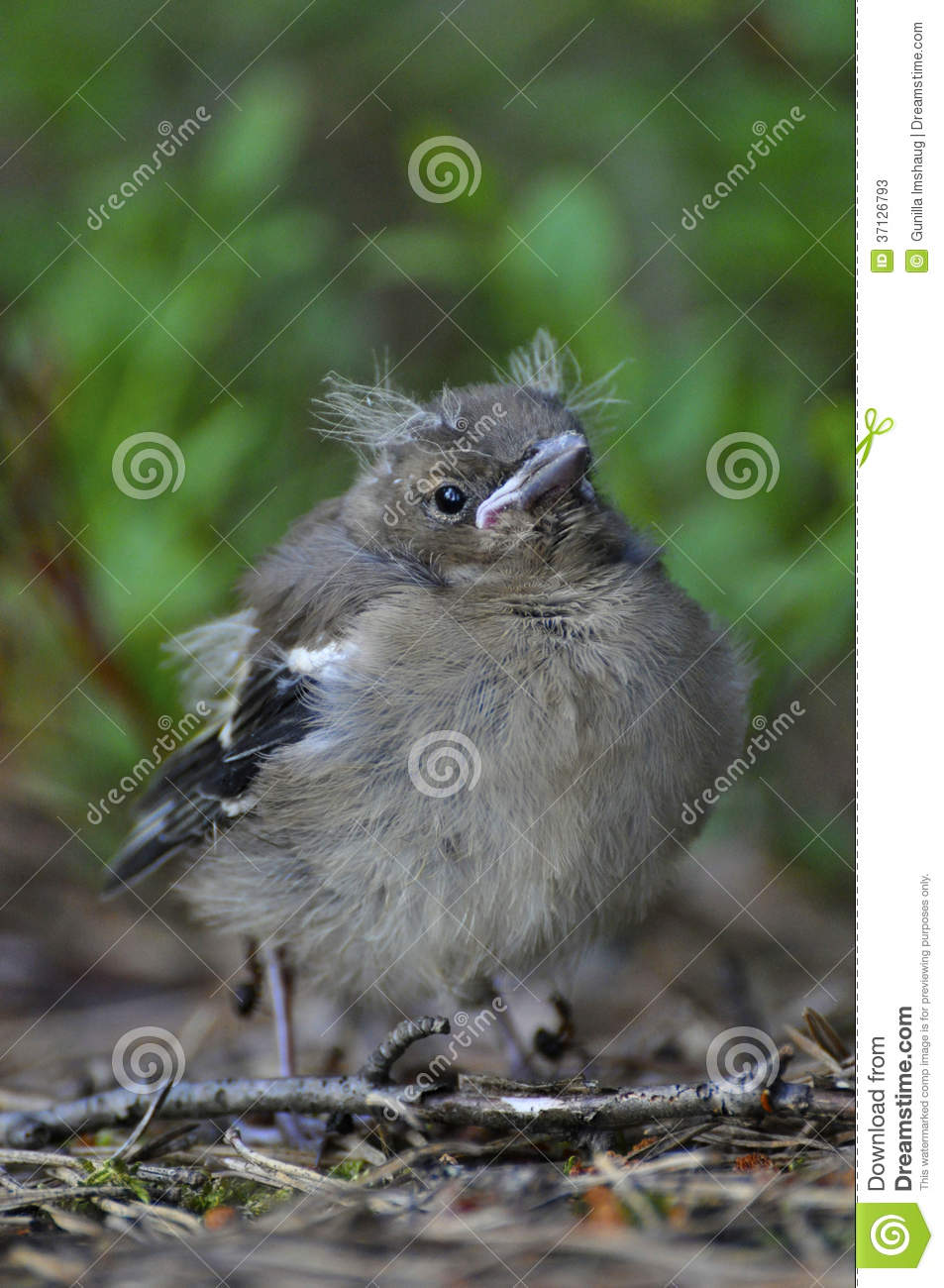how to help baby bird fallen out of nest