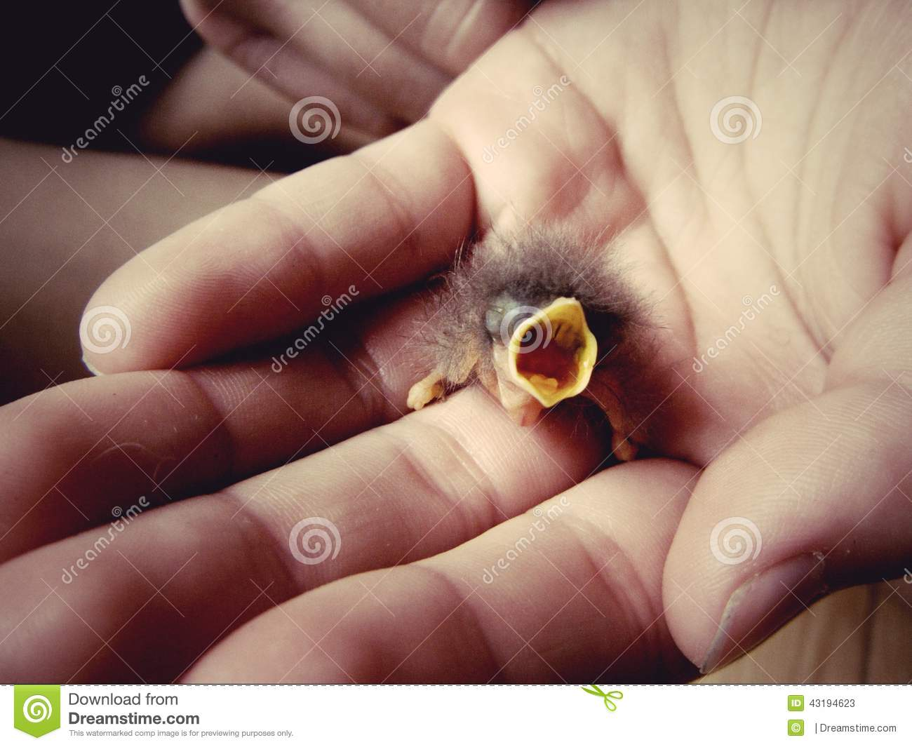 Baby bird in hand stock image. Image of open, want, beak ...