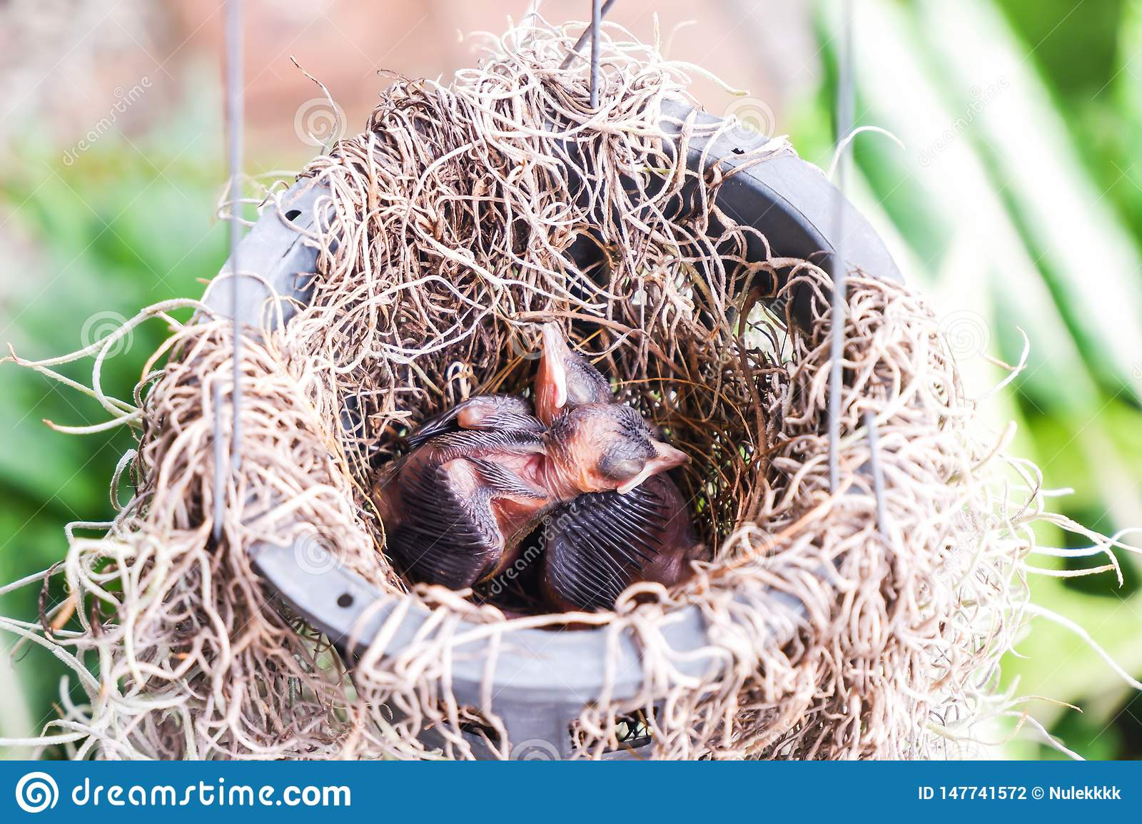 Baby birds in a plant pot