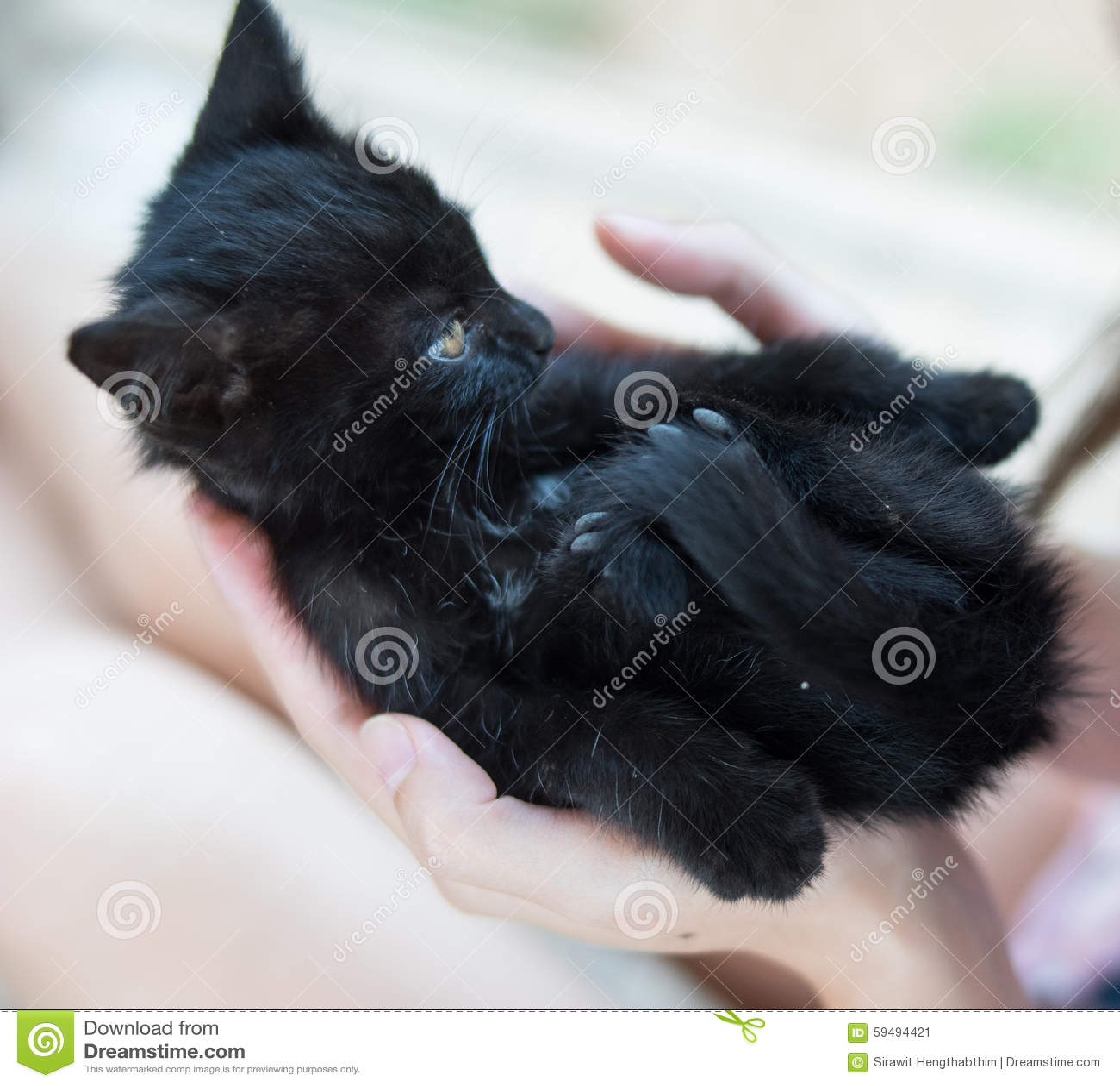 Baby Black Cat Stock Photo - Image: 59494421