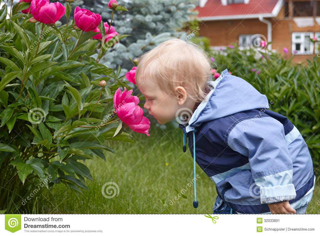 baby boy smelling giant rose stock image image 32033891. Black Bedroom Furniture Sets. Home Design Ideas