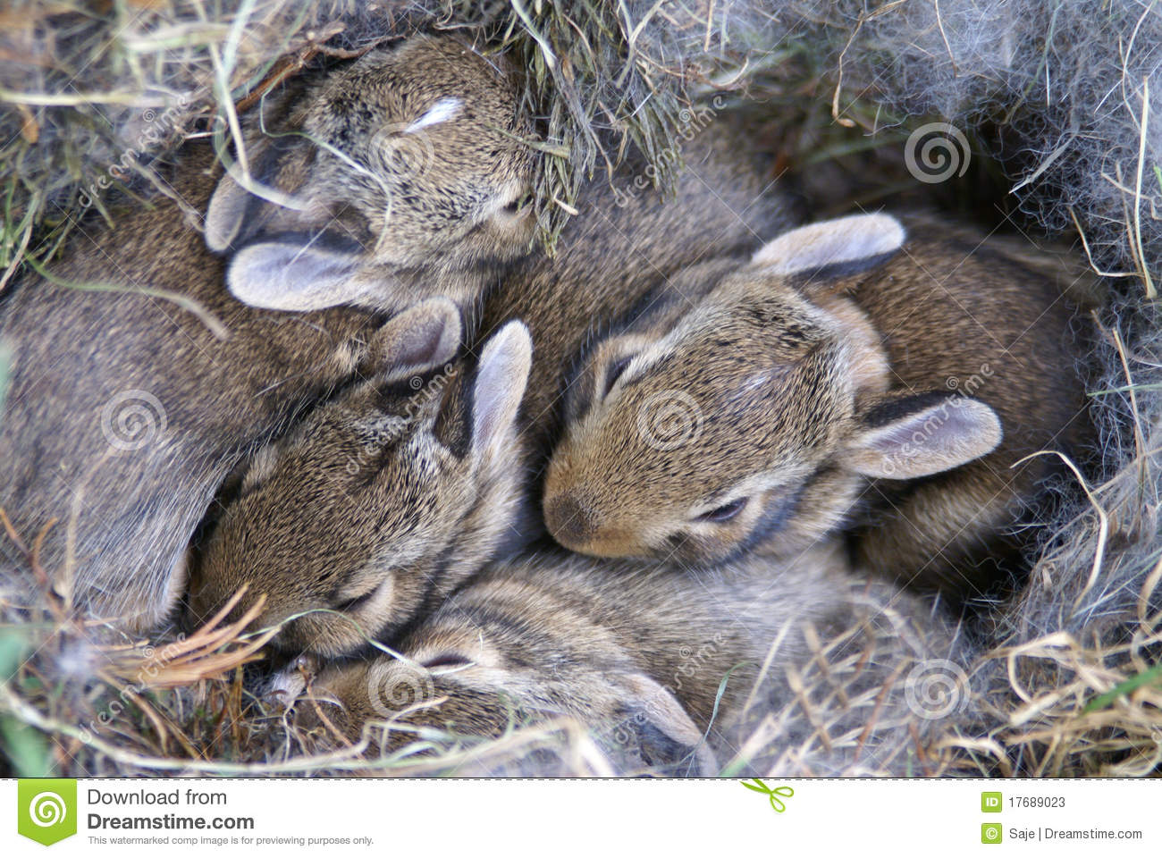 Baby Bunnies Huddled In Their Nest Stock Photos Image