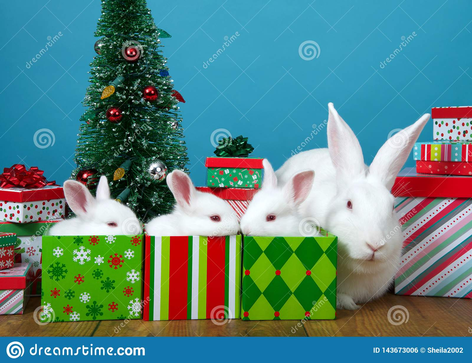 Christmas Presents For Mom.Baby Bunnies In Presents With Mom Sitting Near Stock Photo
