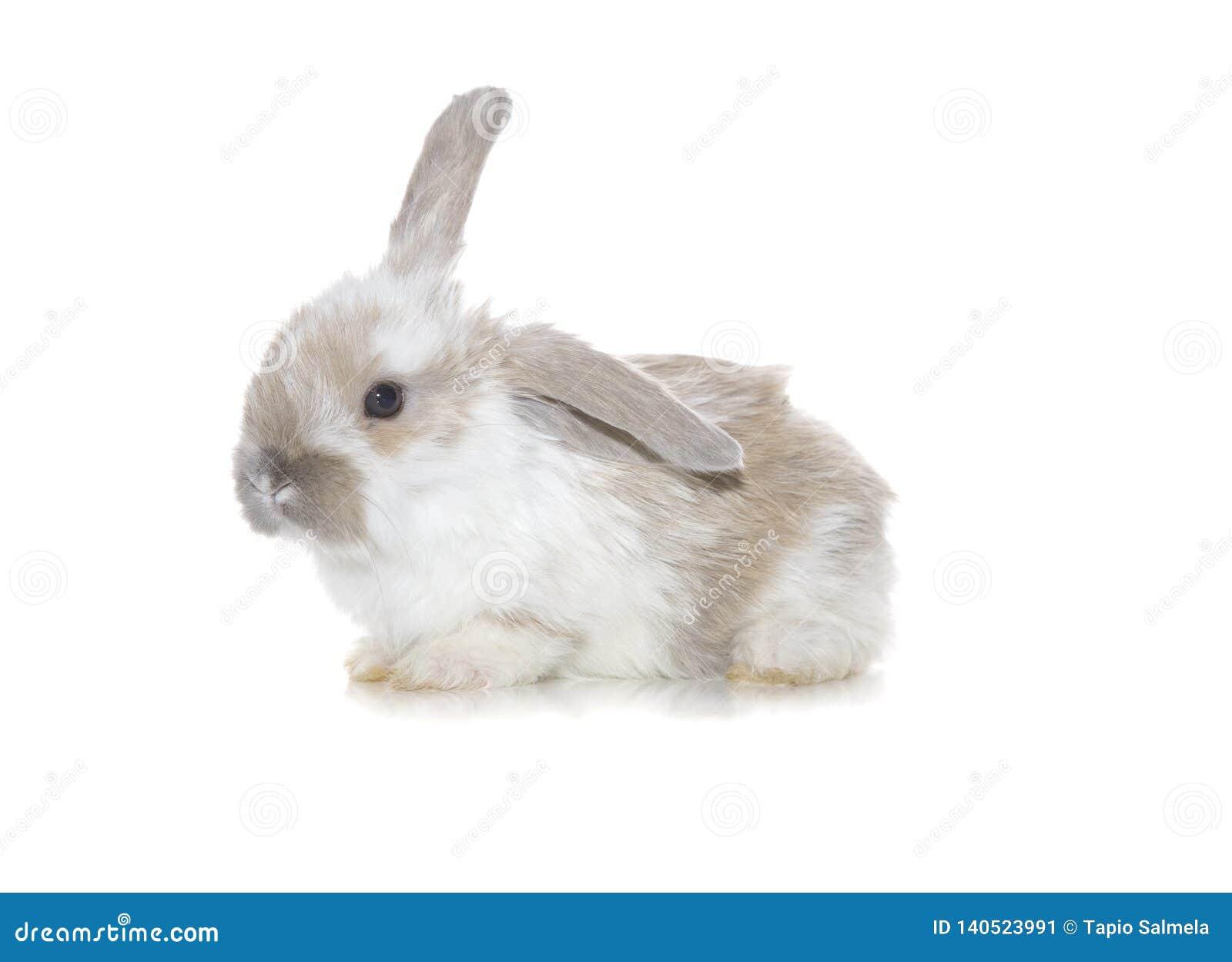 Baby Bunny Cuteness