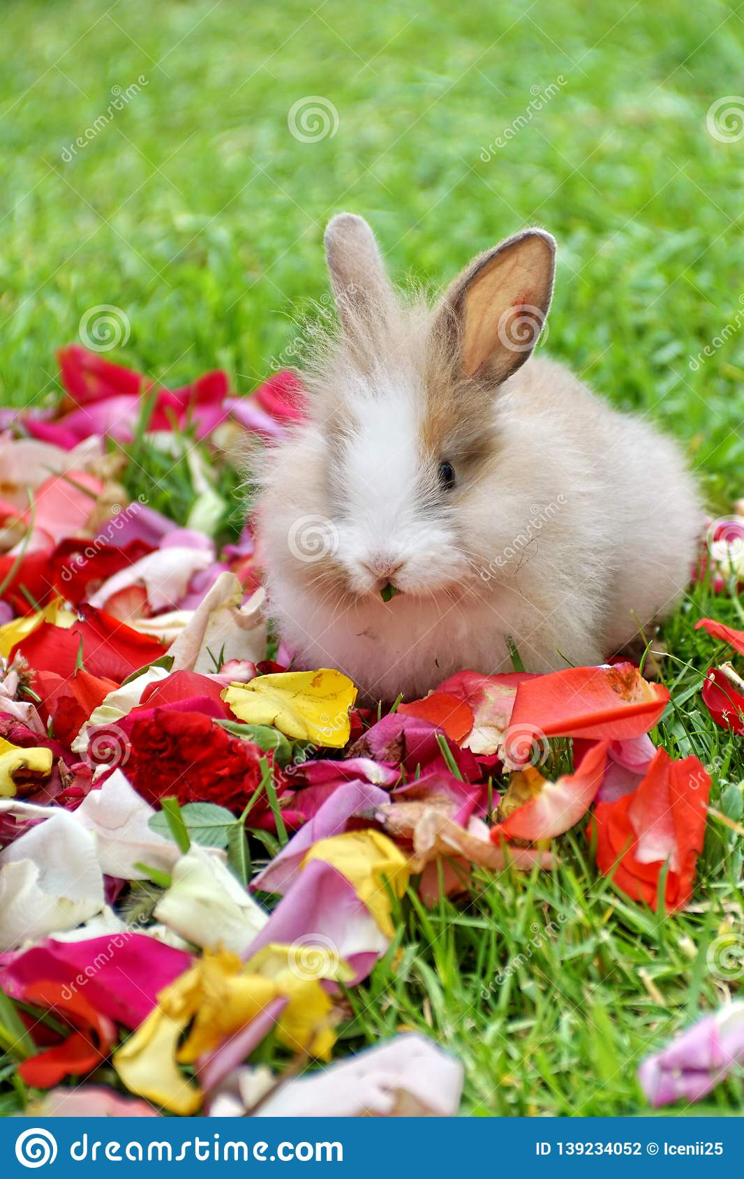 Rabbit in rose petals