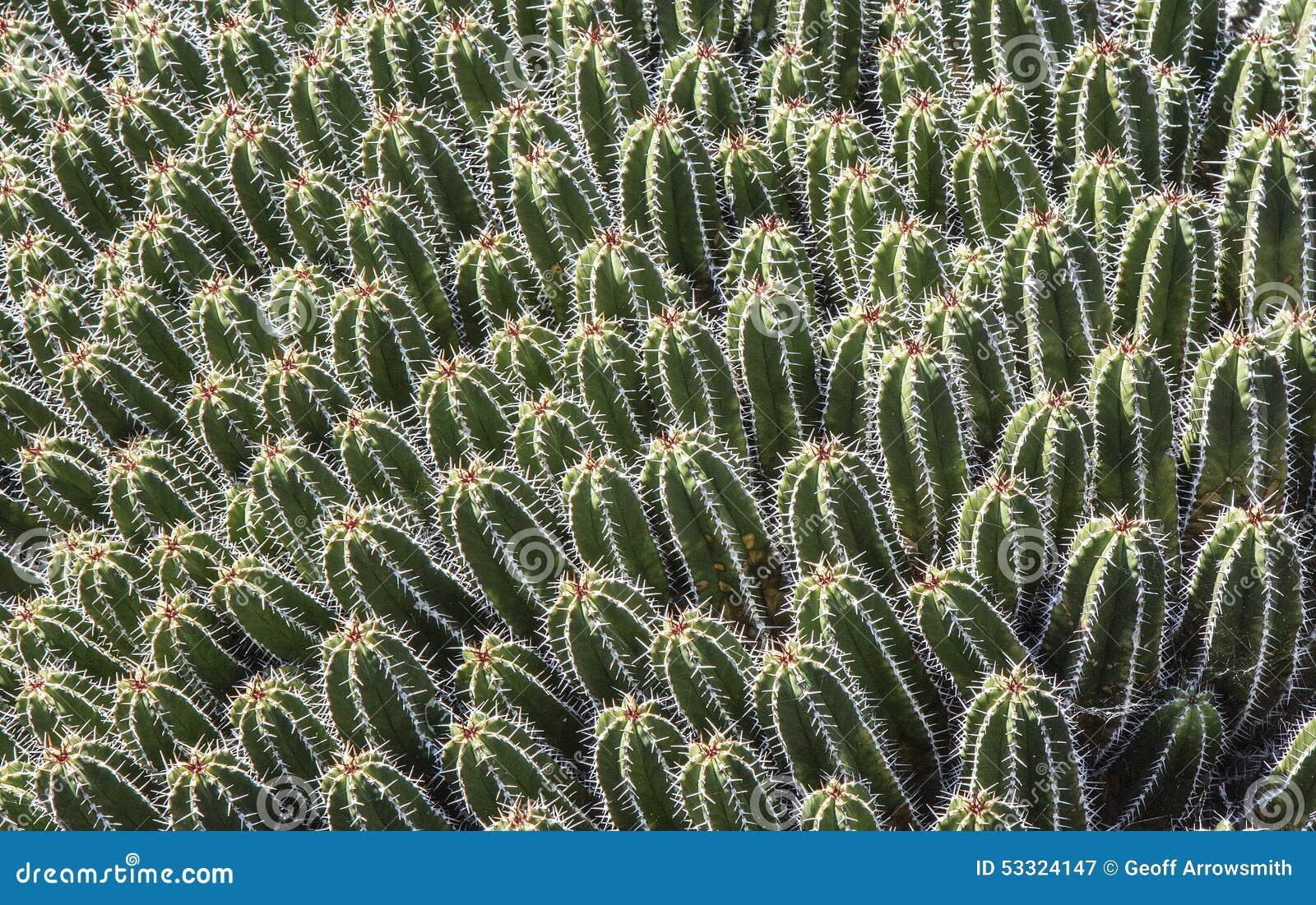 Baby cacti at jardin de cactus stock image image 53324147 for Jardines con cactus