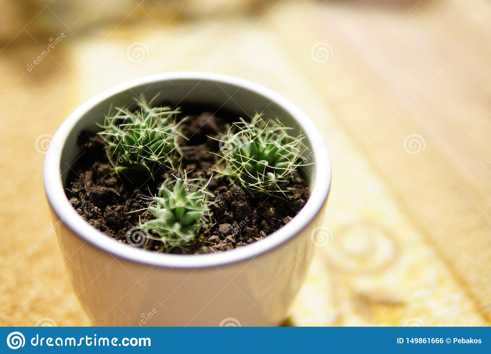 Baby cactus happily growing