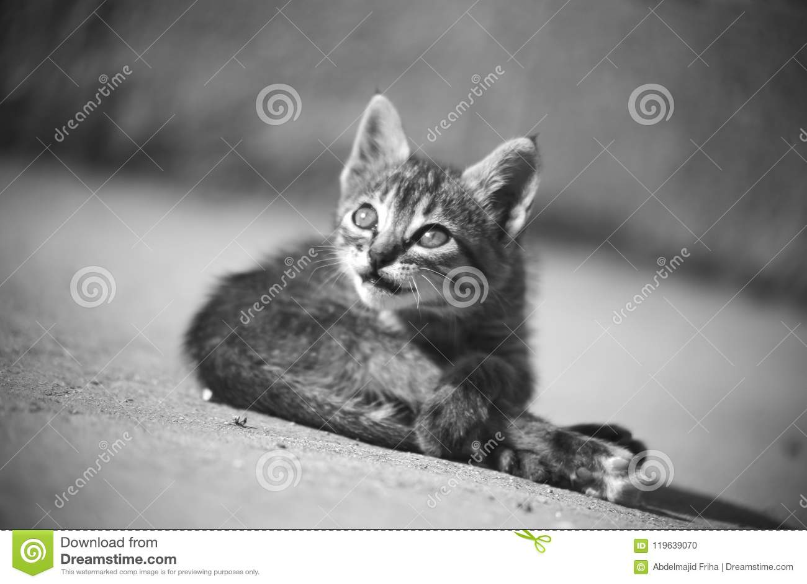 Baby cat play