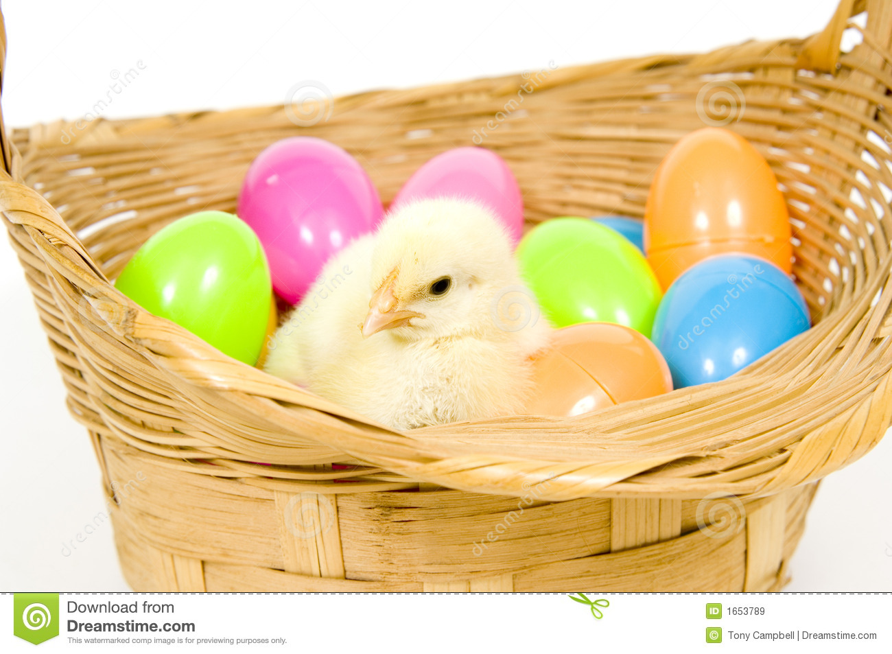 Baby Chick In A Basket With Plastic Easter Eggs