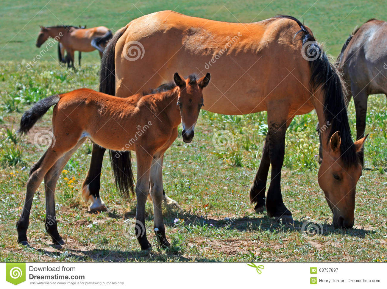 3 052 Filly Baby Horse Photos Free Royalty Free Stock Photos From Dreamstime