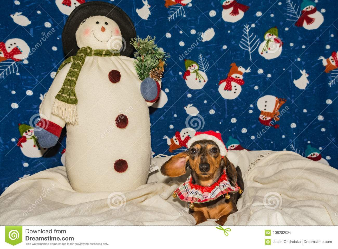 An Adorable Dachshund Puppy In A Santa Hat Stock Photo Image Of Happiness Blue 106282026