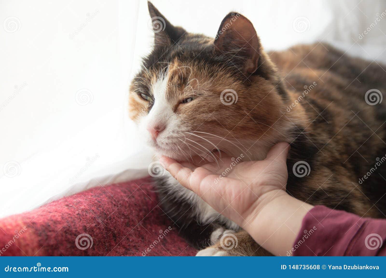Baby die een kat petting De hand van kinderen strijkt en raakt een slaapkat huisdieren