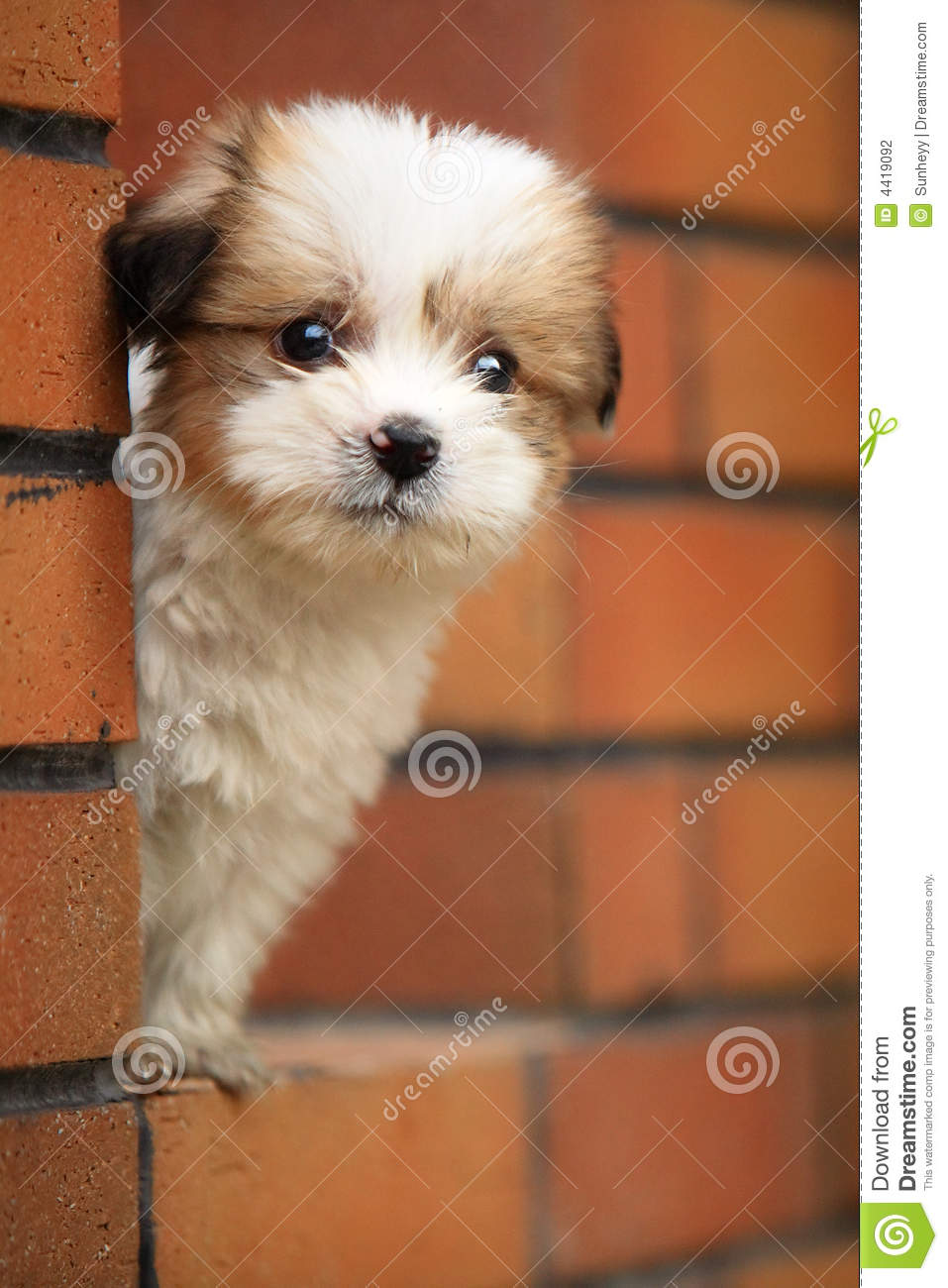Baby Dog Stock Photography Image 4419092