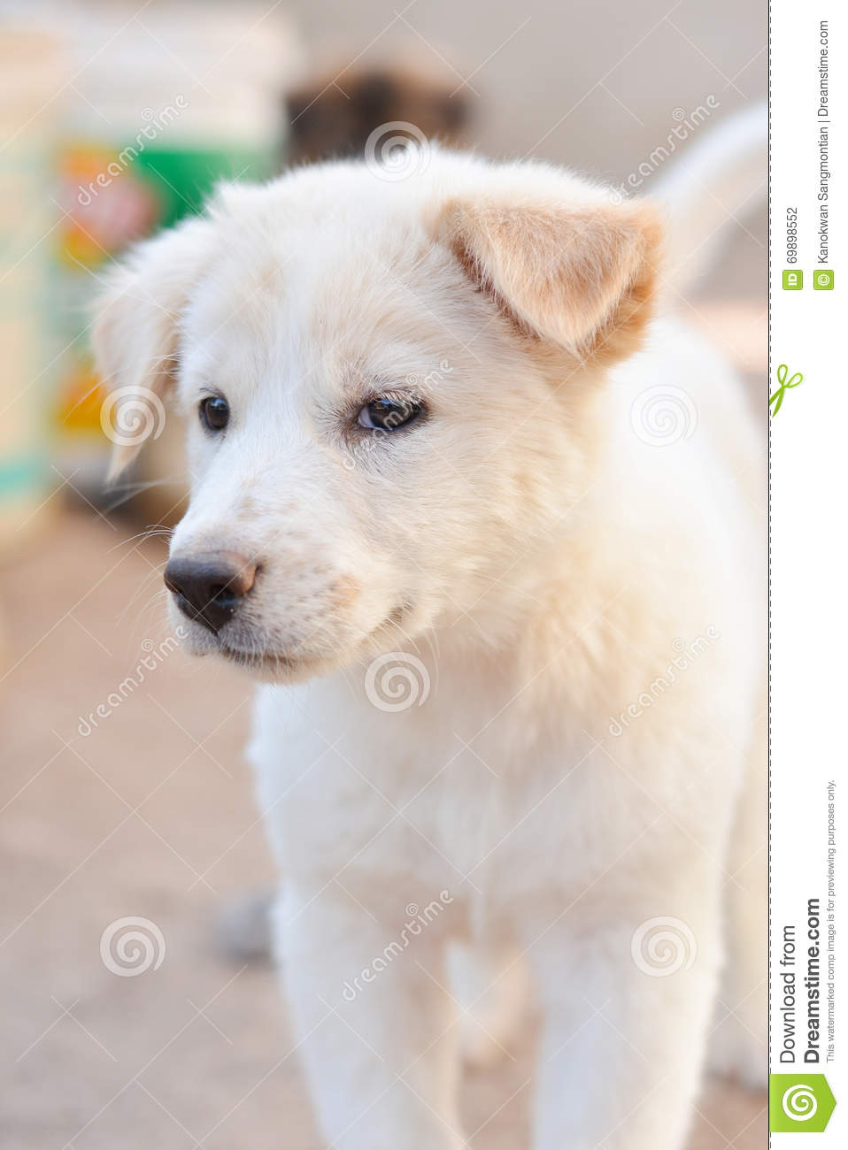Baby Dog White And Cute Stock Photo Image Of Adorable 69898552
