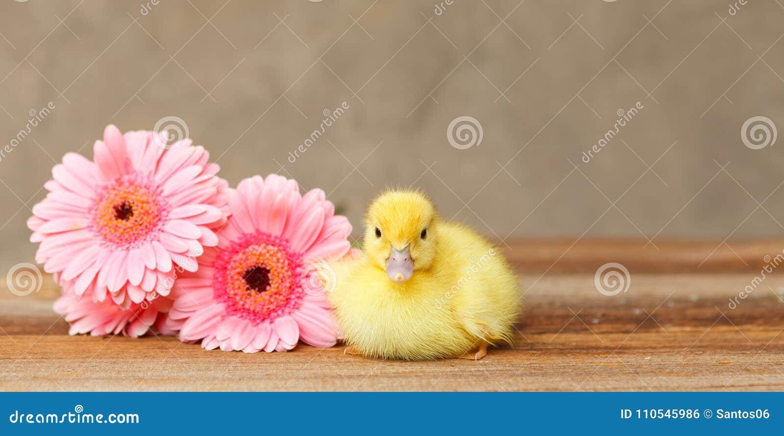 Baby duck beside flowers