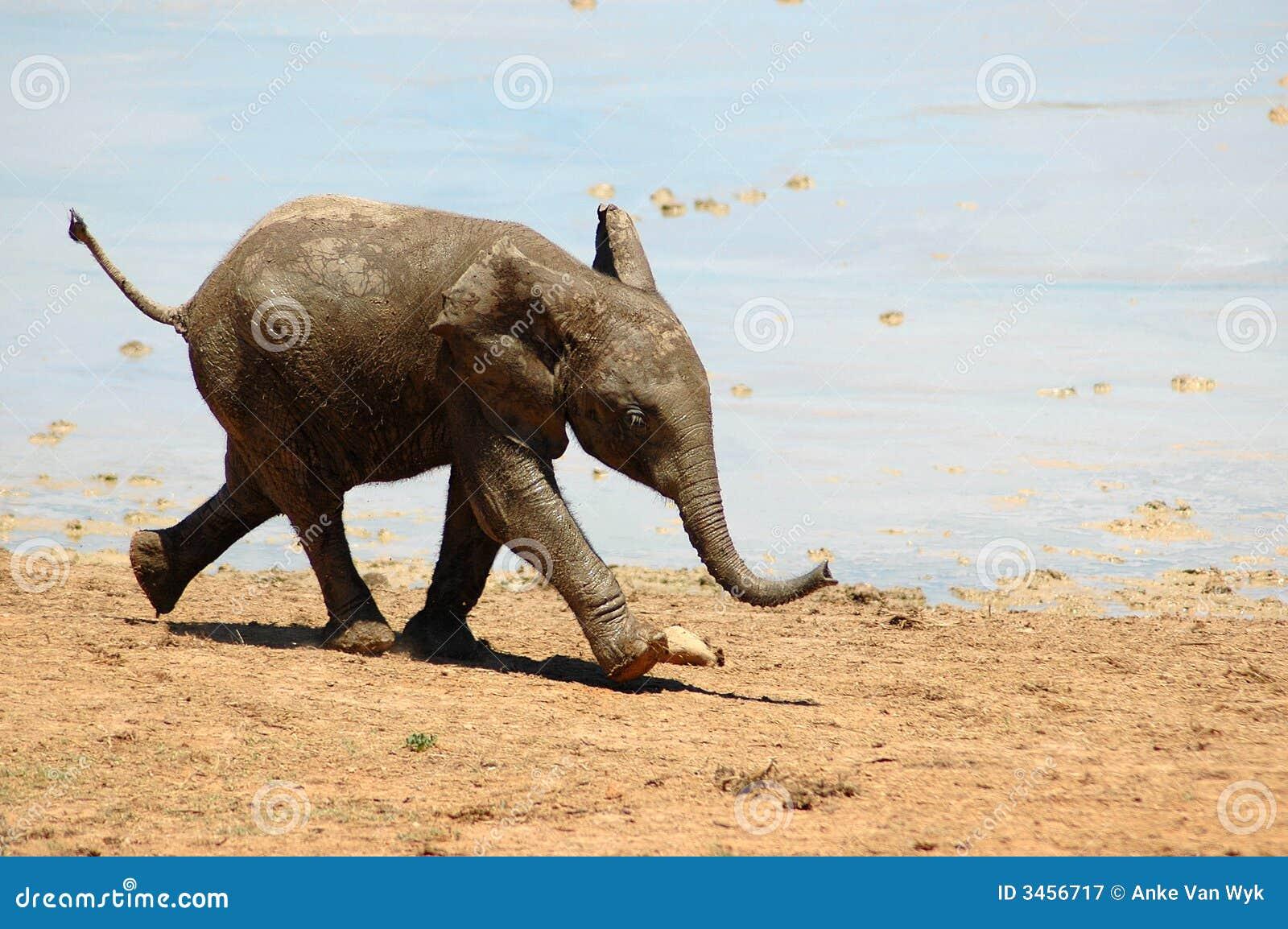 Baby Elephant Royalty Free Stock Photography Image 3456717