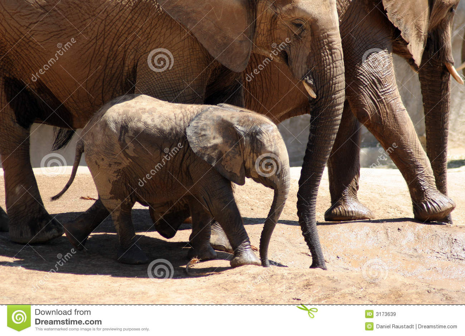 baby elephant after bath royalty free stock images image 3173639. Black Bedroom Furniture Sets. Home Design Ideas