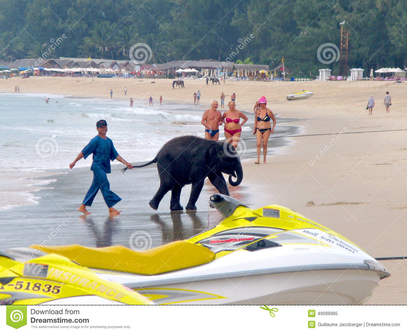 Baby elephant on the beach editorial image. image of asia 49099985