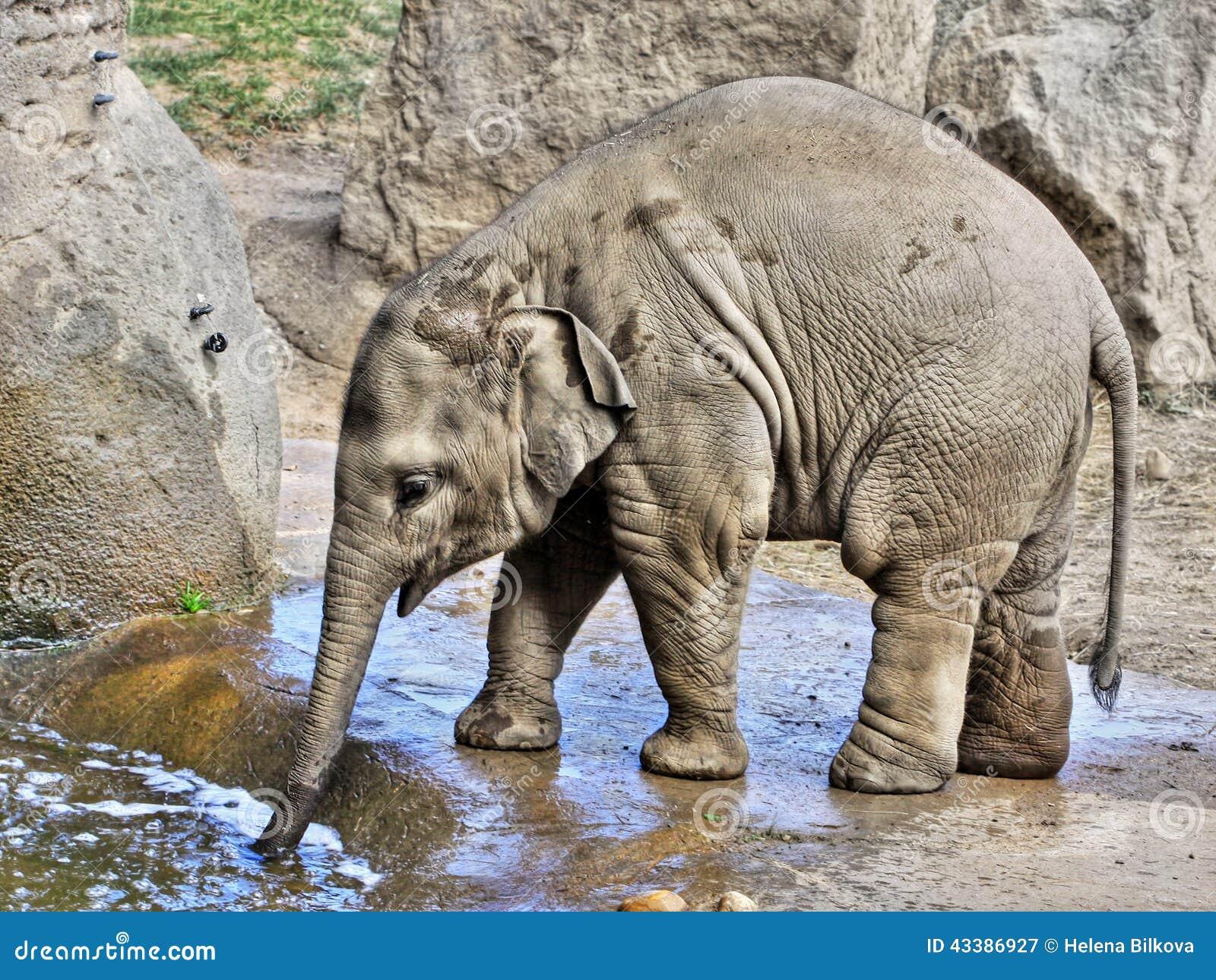 Baby Elephant stock image. Image of body, babies, calves ...