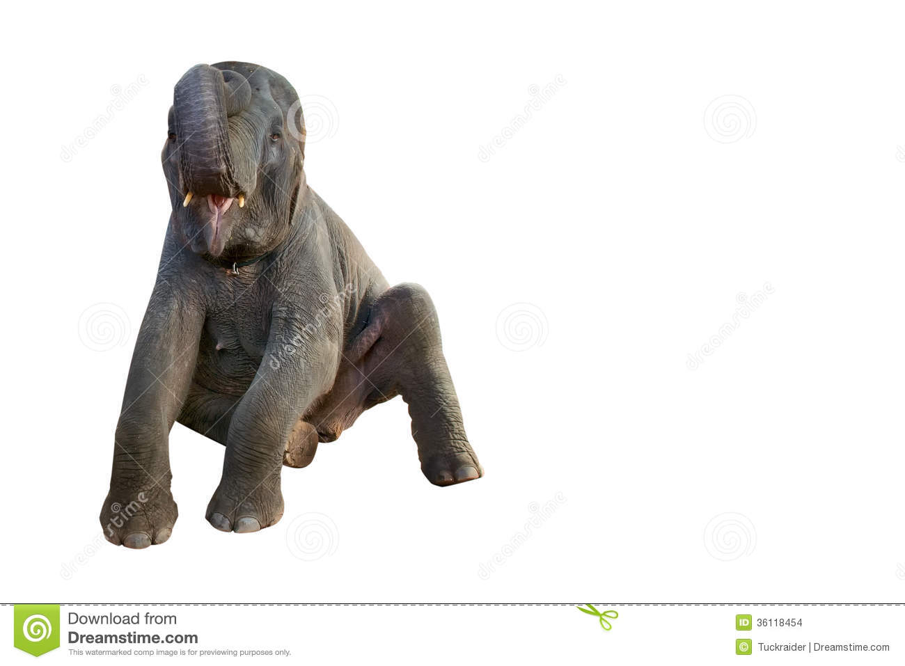 baby elephant sitting stock images image 36118454 Indian Elephant Drawing indian elephant clipart free
