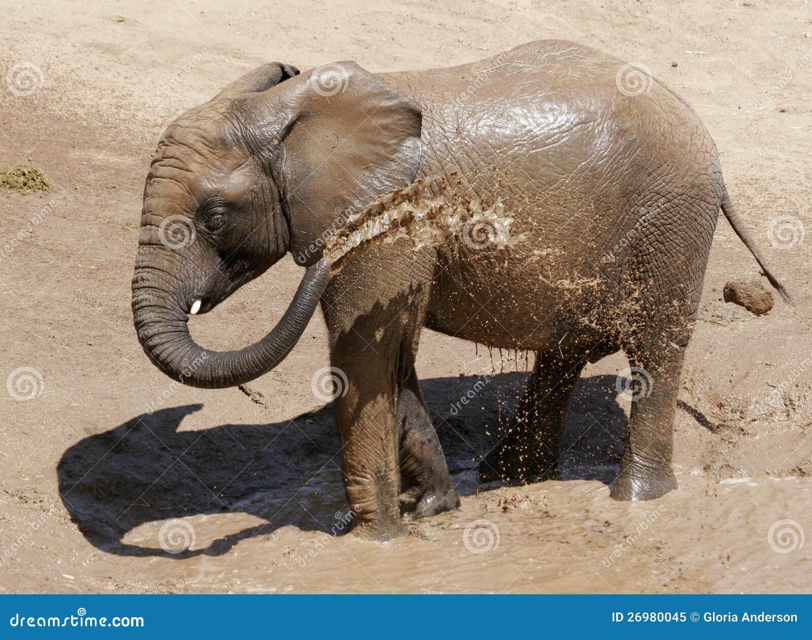 Elephant spraying water - photo#27