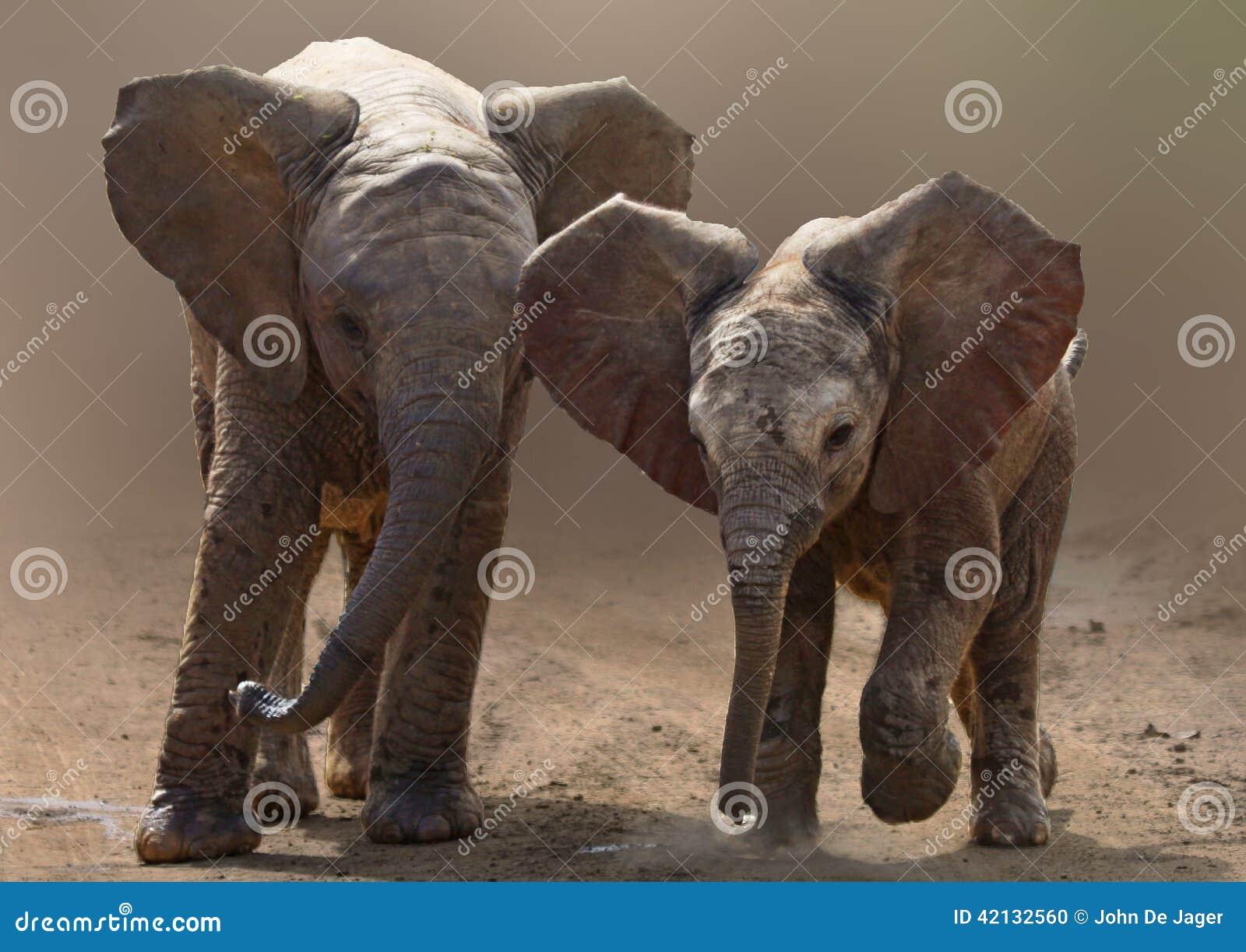 Baby elephants on road