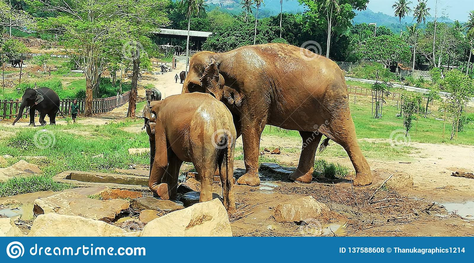 A Baby eliphant with mother