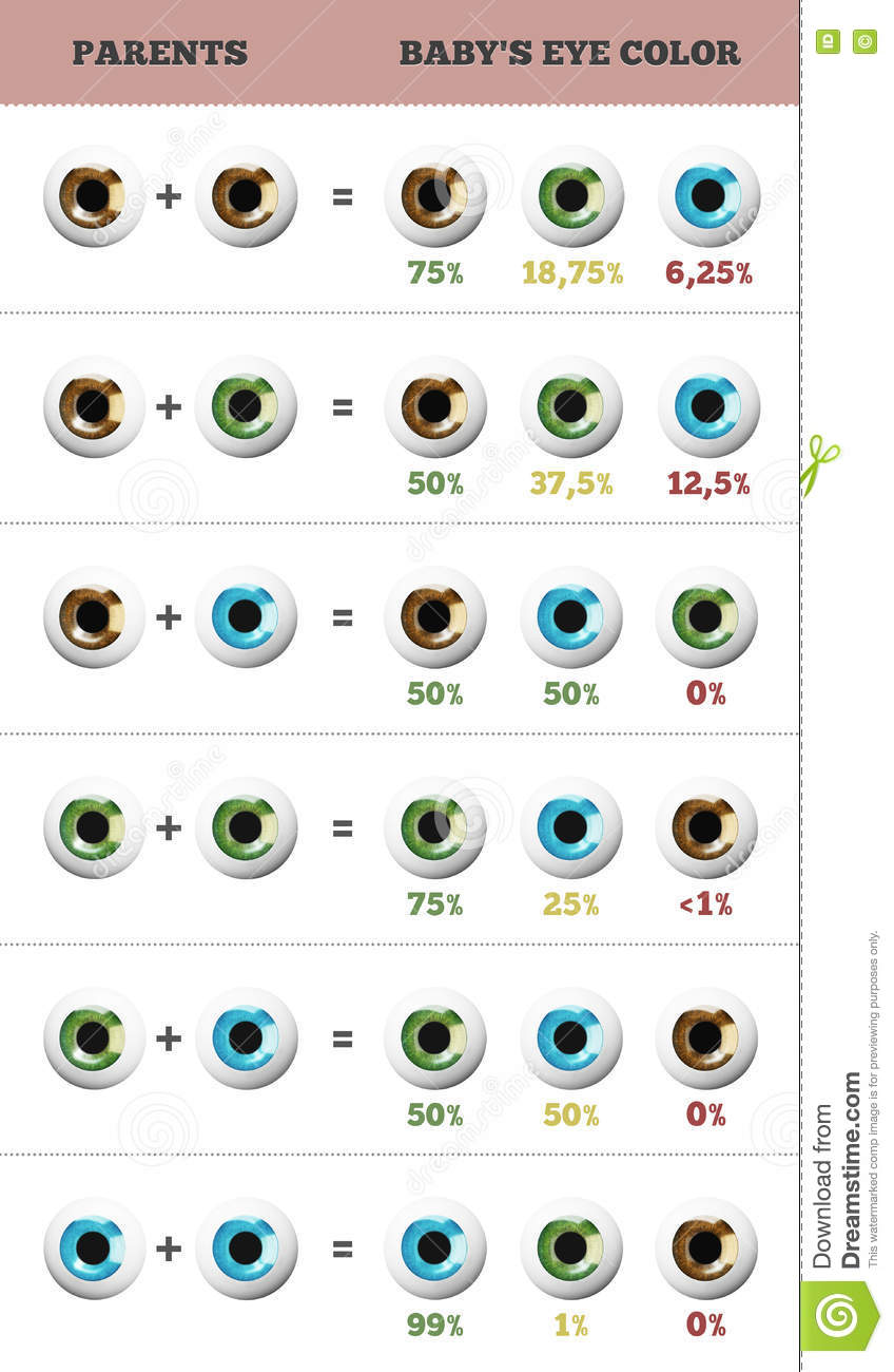 baby eye color predictor likelihood of eyes color of the. Black Bedroom Furniture Sets. Home Design Ideas