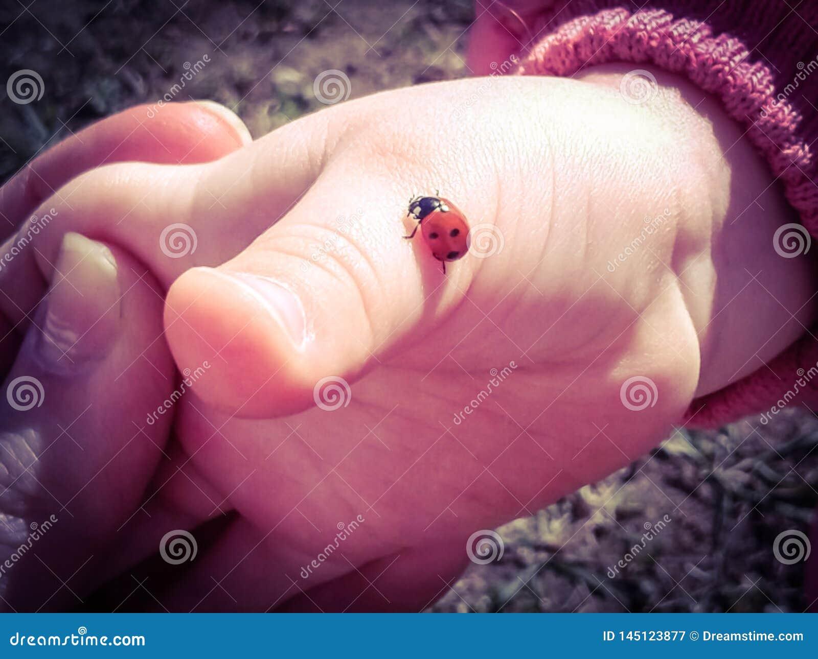 Baby hand and ladybug creeping up