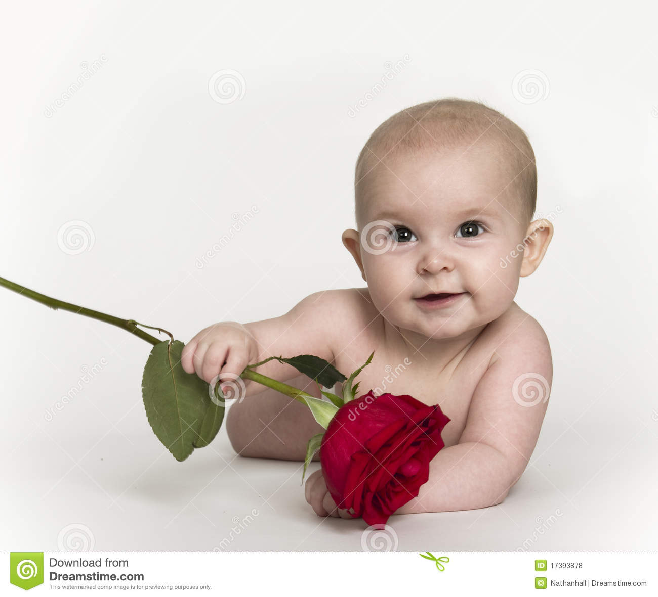 L Love U Bart U A Bby: Baby Holding Rose Stock Photo. Image Of Romantic, Smile