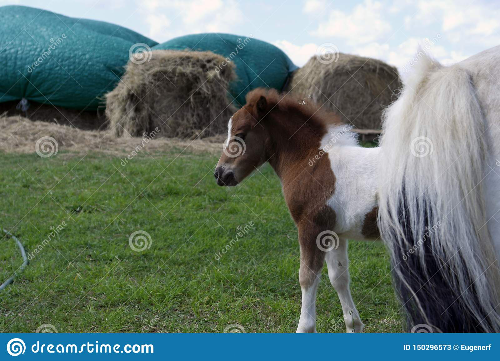 A baby horse at the farm