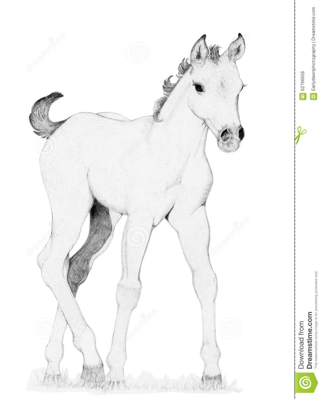 pencil drawing of a baby horse trotting toward the viewer. This was ...