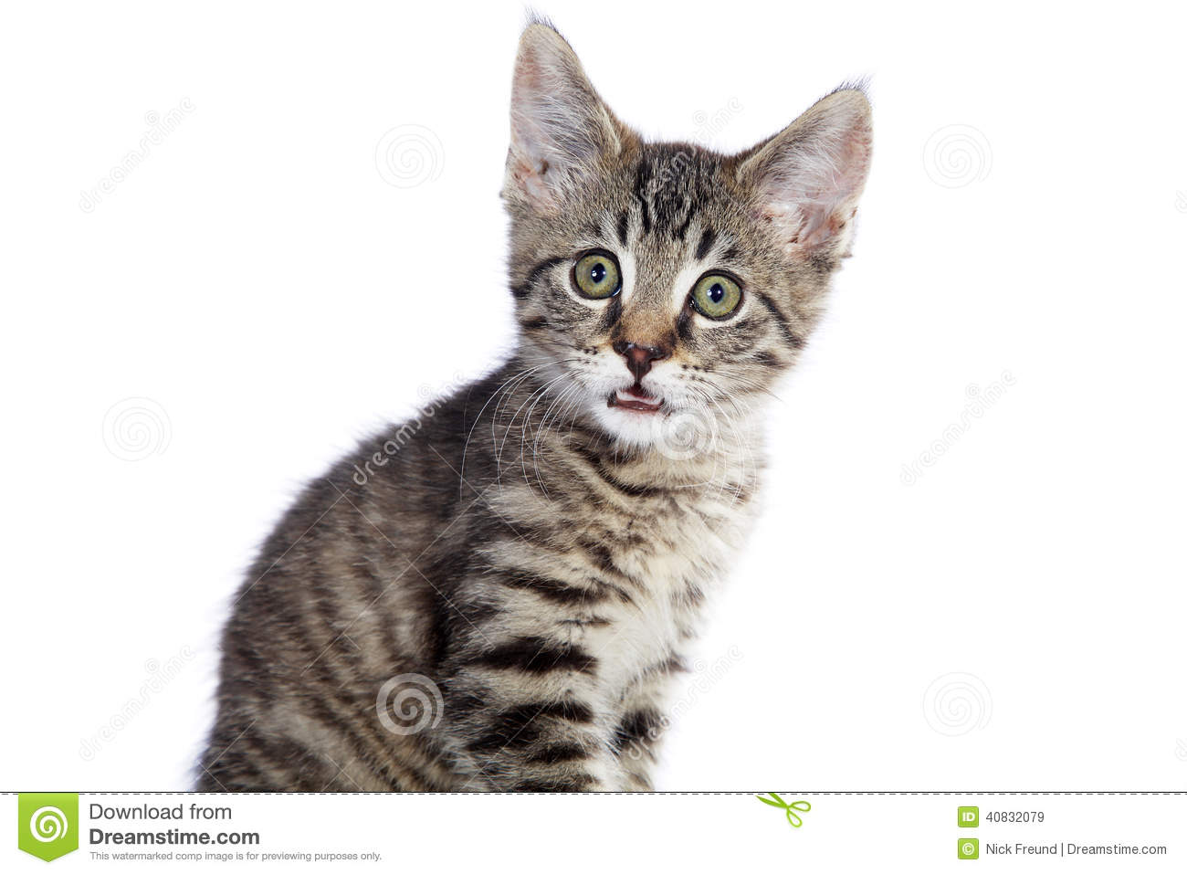 Baby House Cat With Tiger Pattern Stock Photo Image