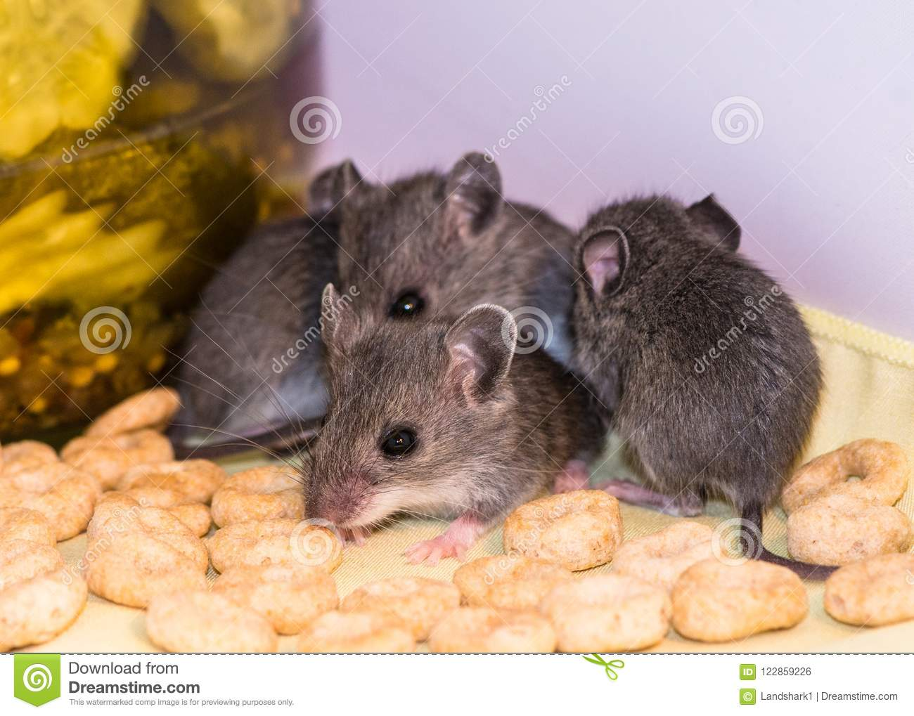 Pleasant Baby House Mice Loose In A Kitchen Cabinet Stock Photo Beutiful Home Inspiration Ommitmahrainfo