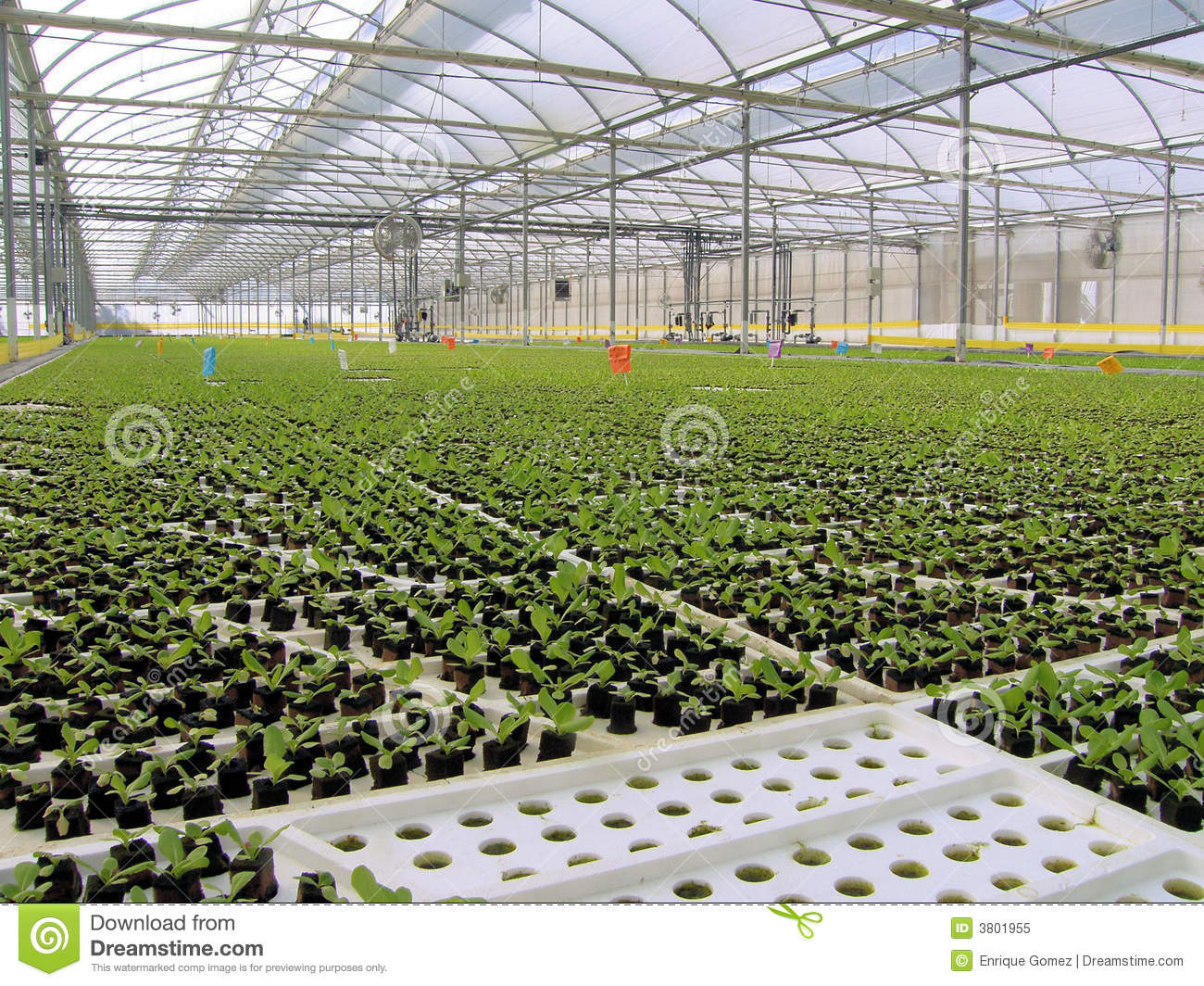 Baby Hydroponic Lettuces