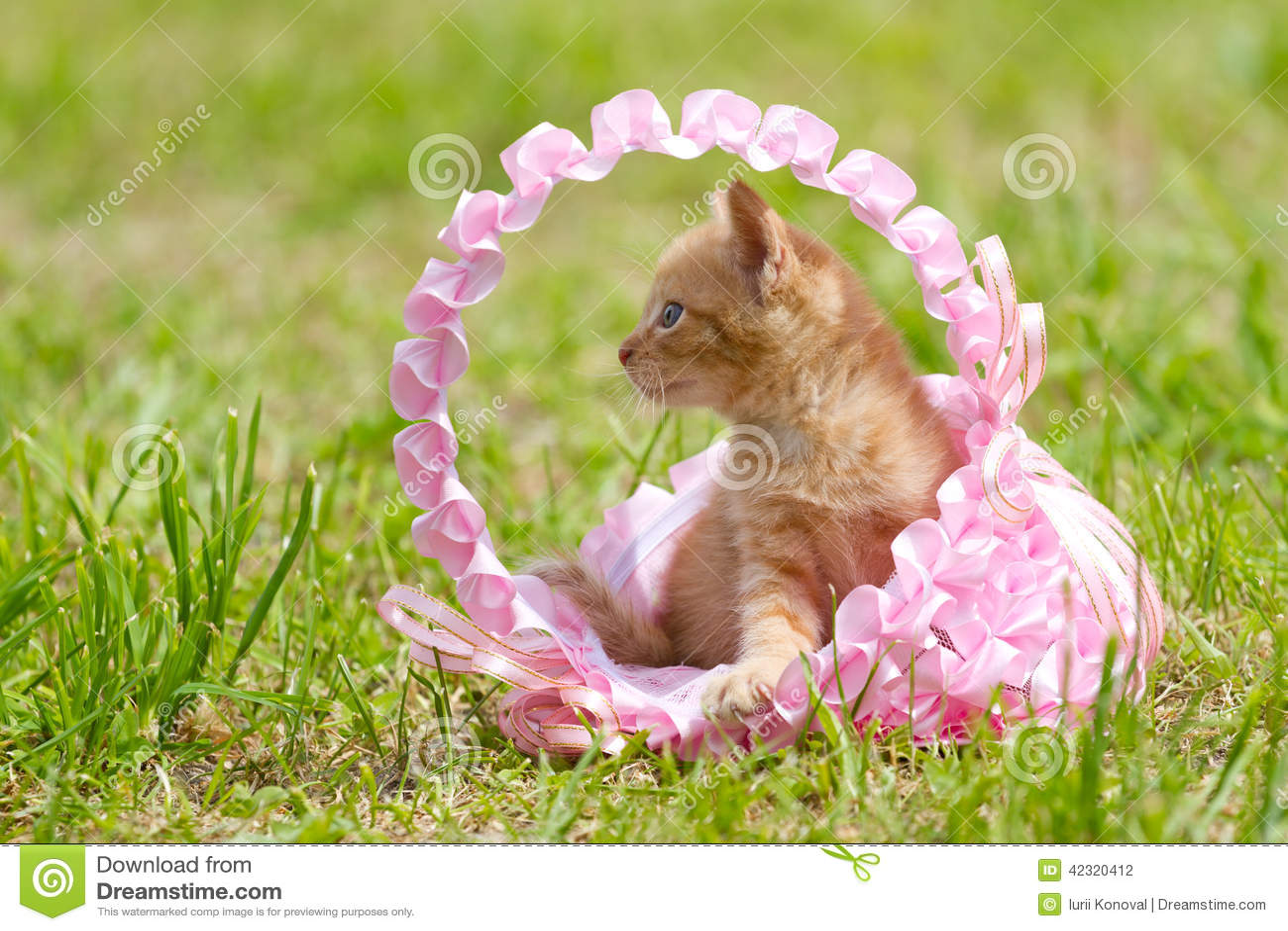 stock photo newborn little kitten